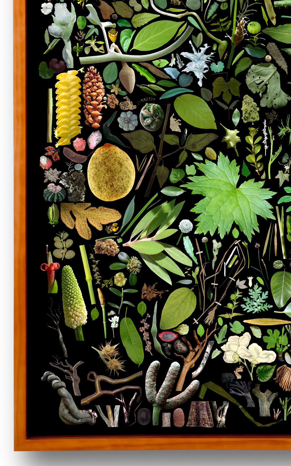 Case Simmons, Simmons & Burke, Plant Collection Palette #1, Digital Collage,Digital Art, Photoshop Collage, Contemporary Collage,Case Simmons Art, Collage Fine Art, Plant Art, Digital Flower Art, Collection Art, Archive Art, Kohn Gallery