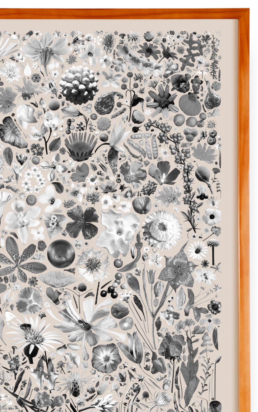 Case Simmons, Simmons & Burke, Plant Collection Palette #2, Digital Collage,Digital Art, Photoshop Collage, Contemporary Collage,Case Simmons Art, Collage Fine Art, Plant Art, Digital Flower Art, Collection Art, Archive Art, Kohn Gallery