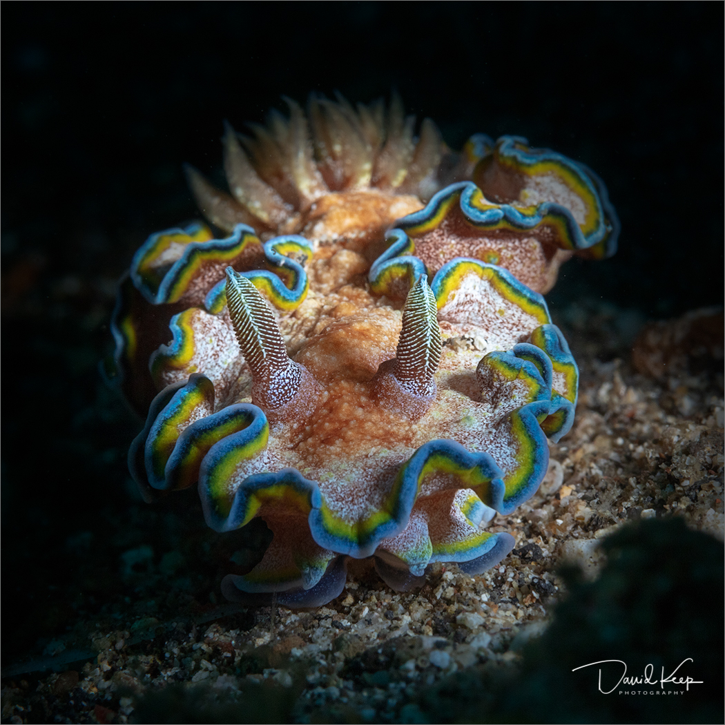 Nudibranch (11 of 13).JPG