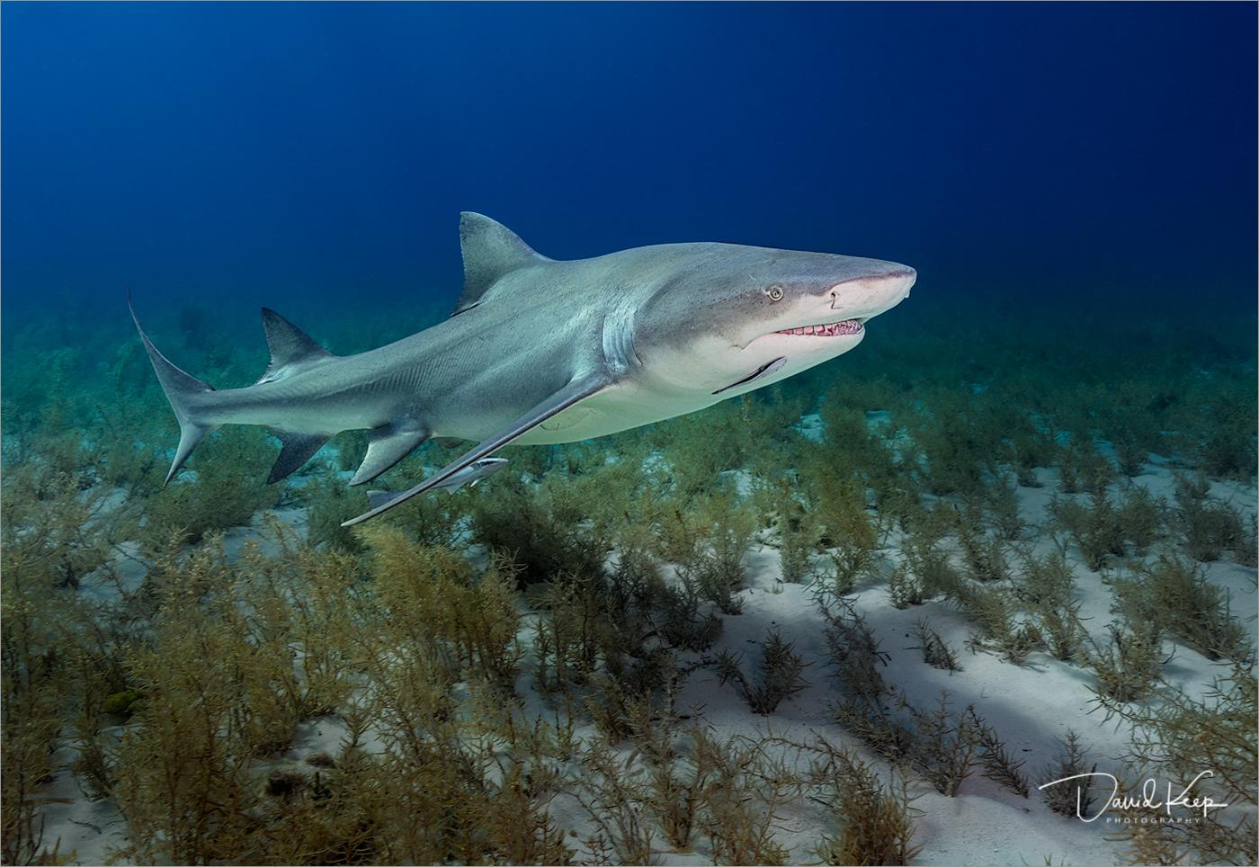 Shark (1 of 2).jpg