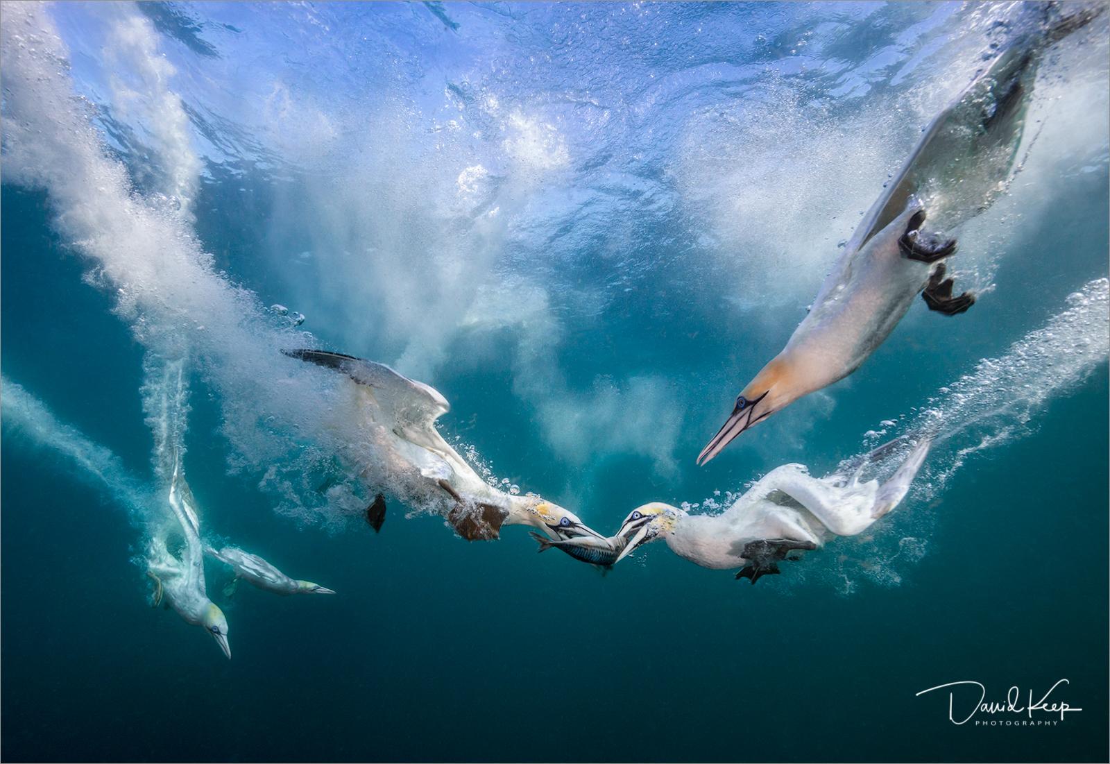 Gannets (1 of 2).jpg