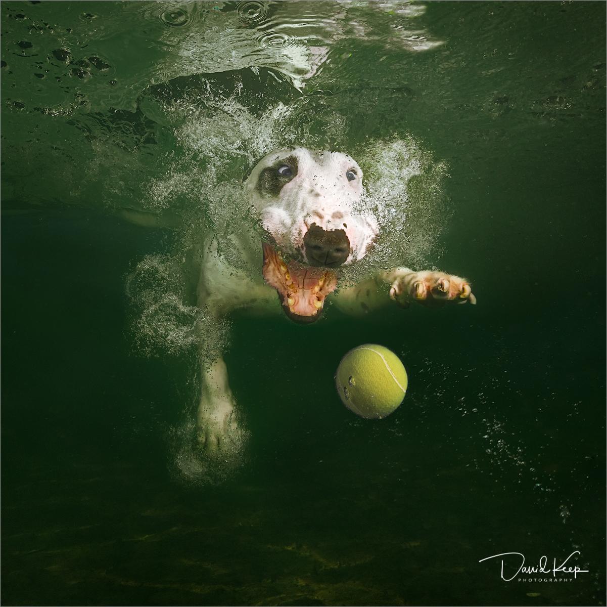 Dog Swim Thai.jpg