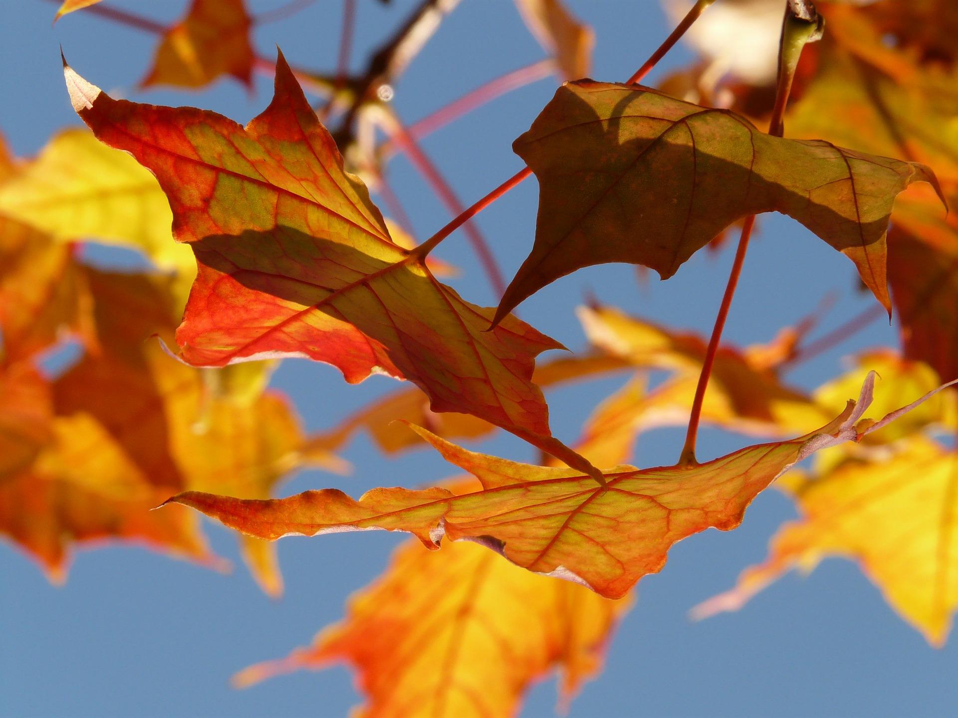 autumn-10484_1920.jpg