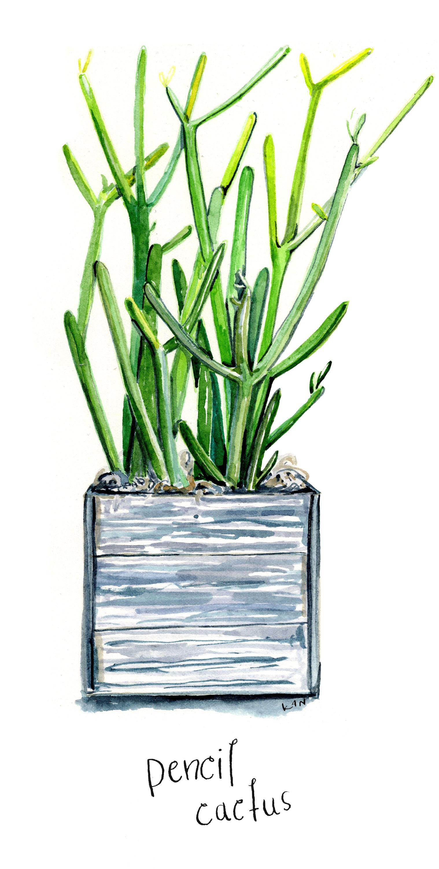 pencil cactus blog.jpg