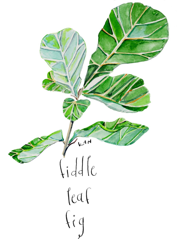 fig leaves blog 3.jpg