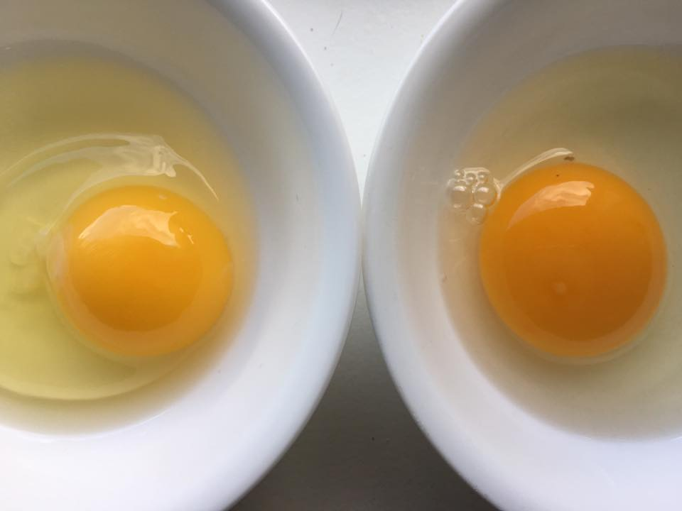 Can you tell the difference? (Store-bought egg on the left, farm-fresh egg on the right.)