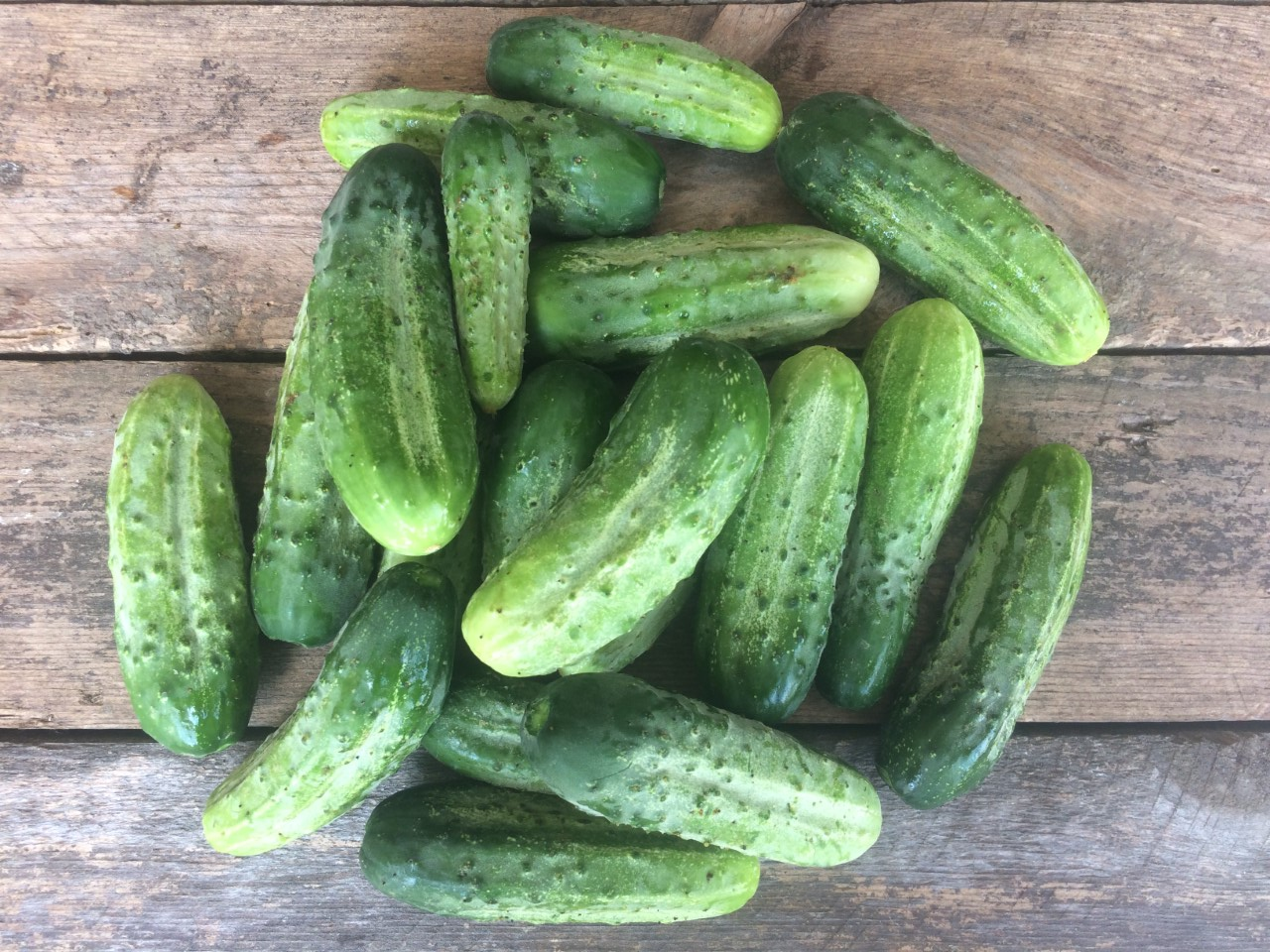 Cucumber, pickler (2).jpg