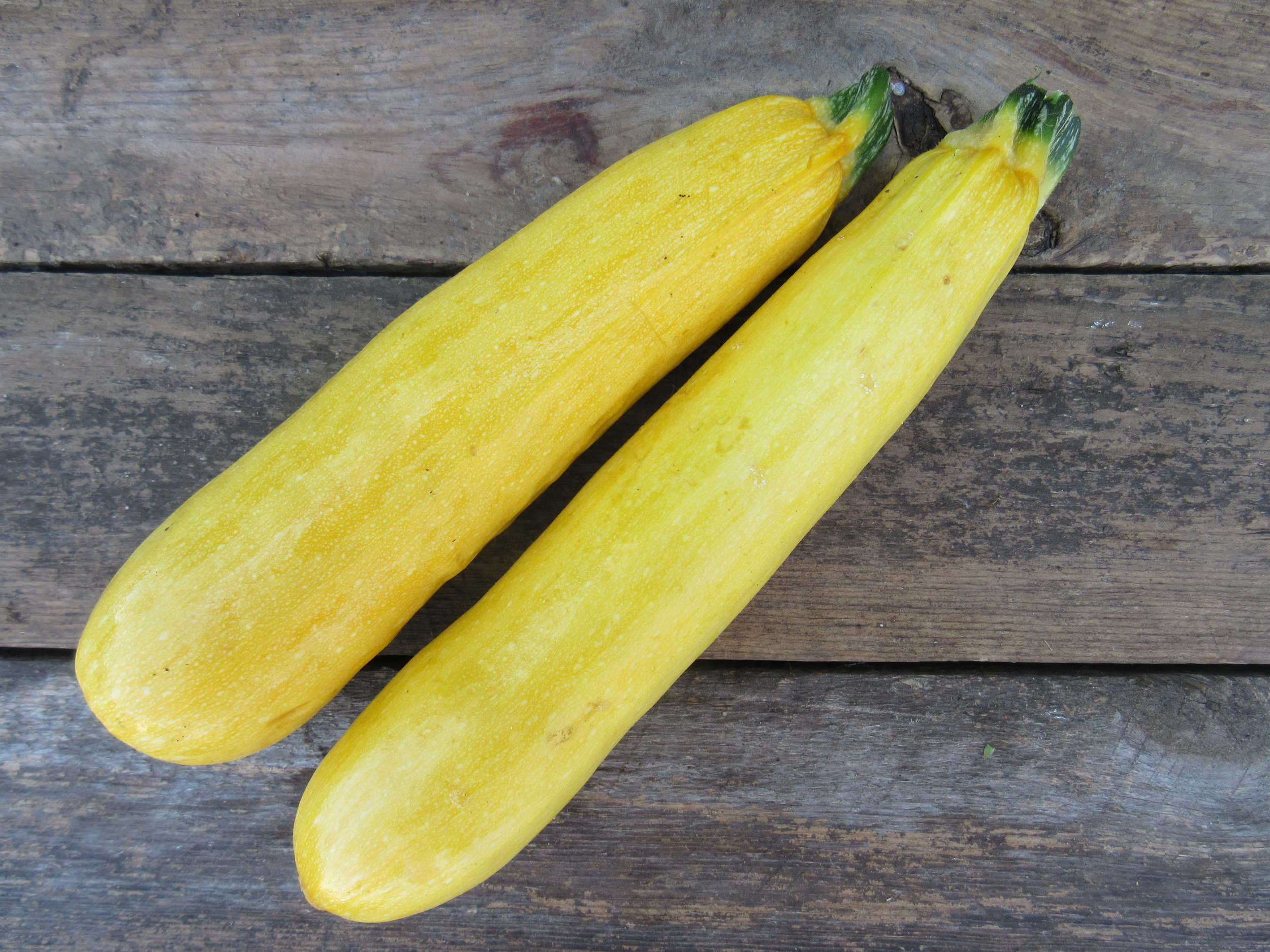 Summer squash, yellow.JPG