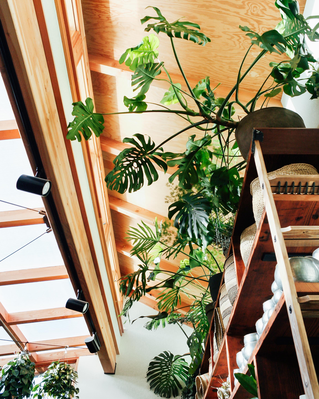 Harka Architecture_Pistils Nursery_Solarium_Conservatory (3).jpg