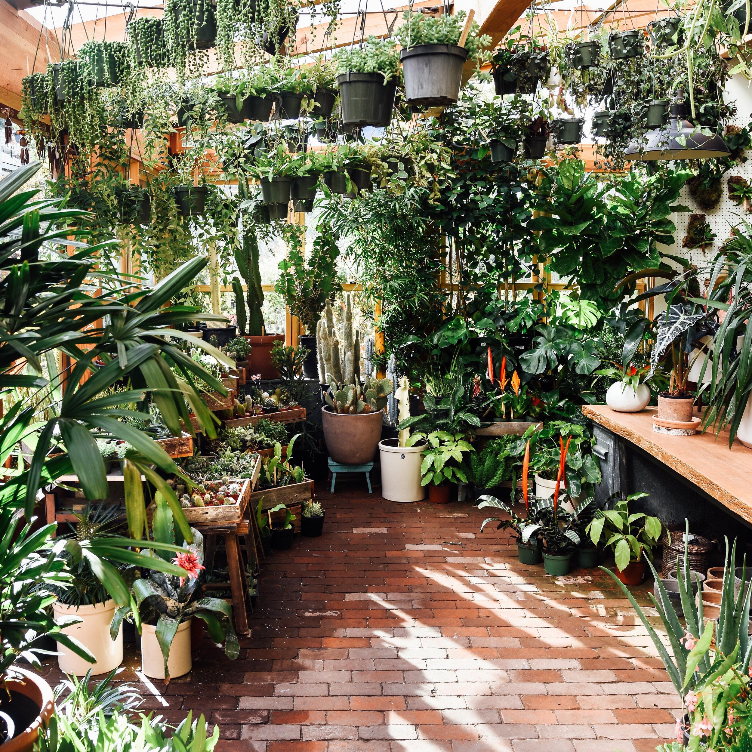 Harka Architecture_Pistils Nursery_Solarium_Conservatory (24).jpg