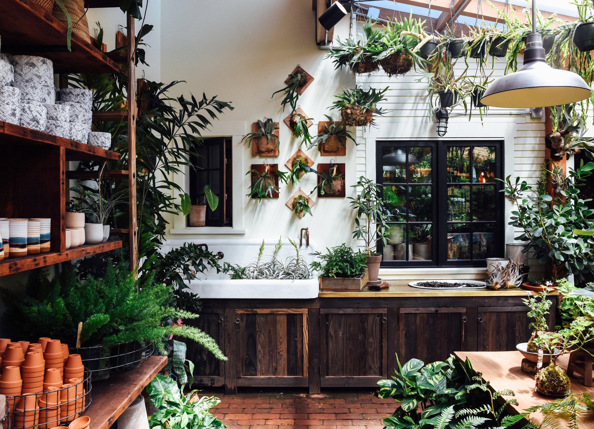Harka Architecture_Pistils Nursery_Solarium_Conservatory.jpg