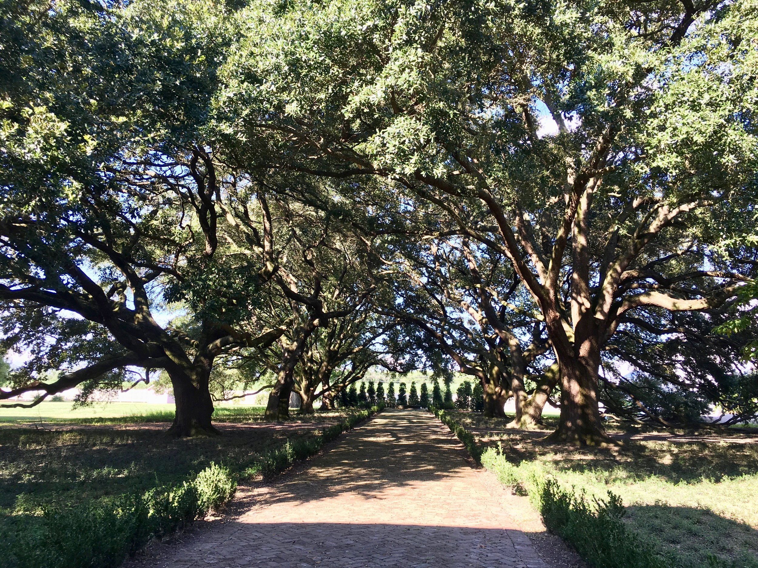 Pathway Shaded by Oak Trees at the Laura Plantation—Vacherie, LA