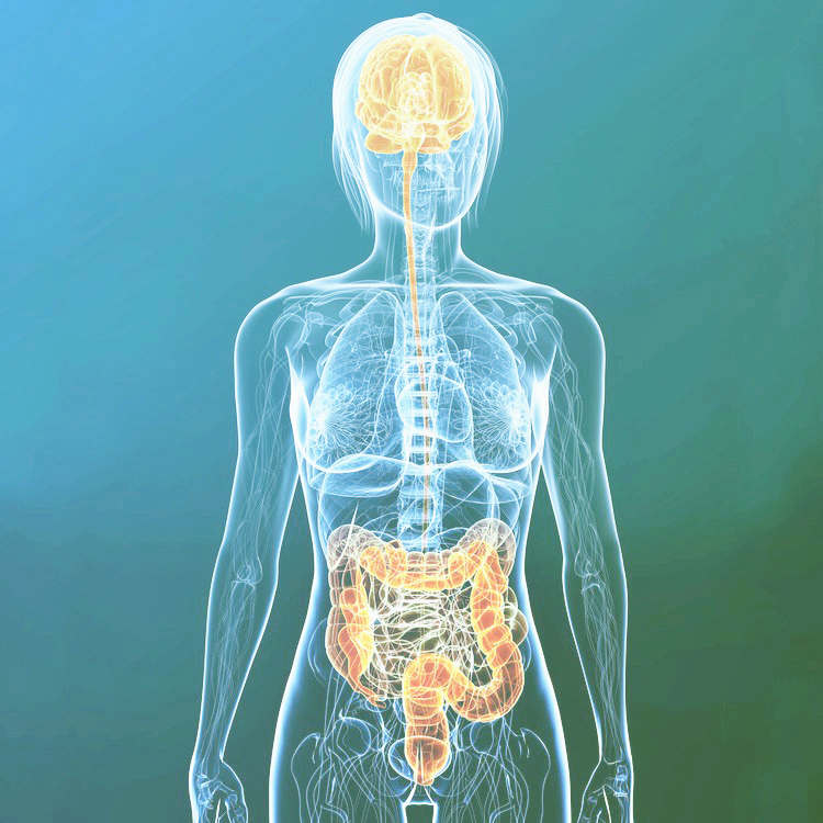 Gut-Brain Connection -
