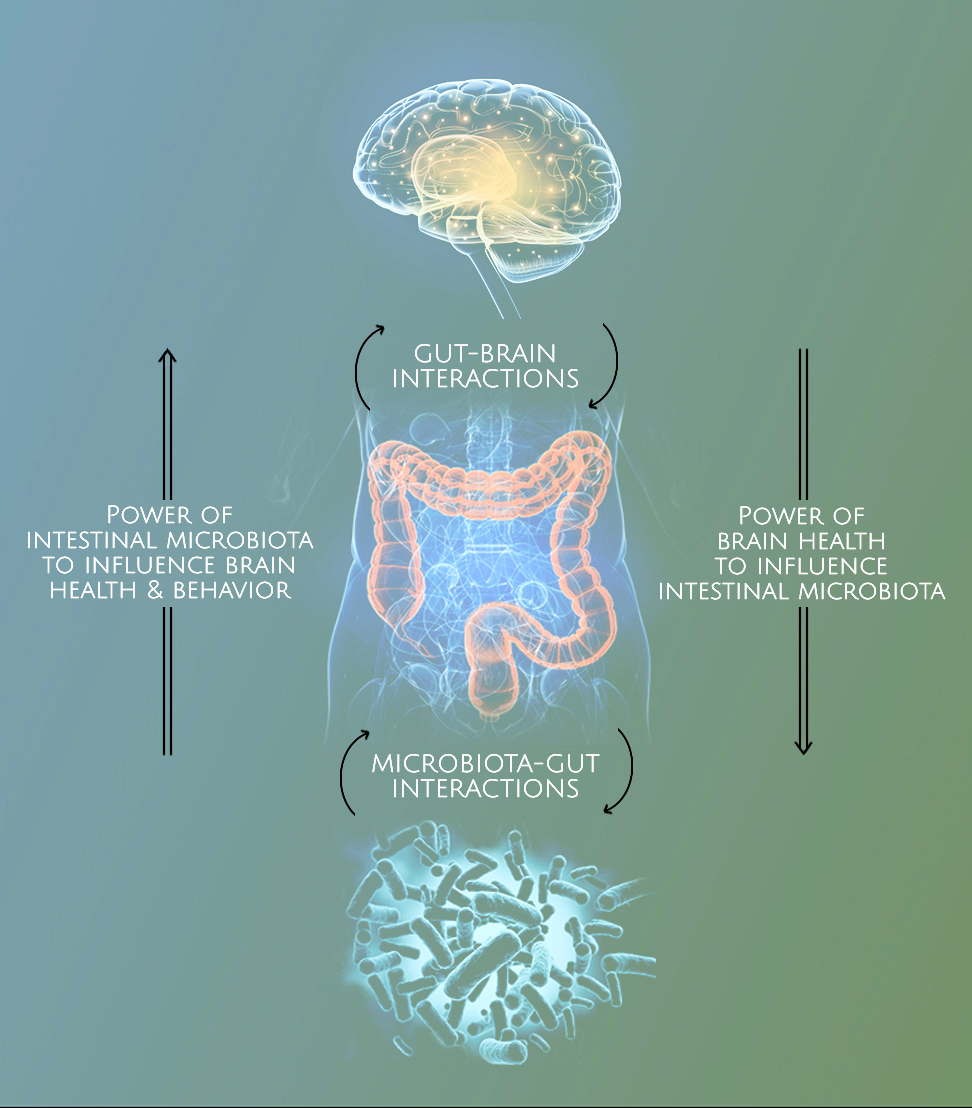 Gut-Brain Interactions and the role of the microbiome in brain health
