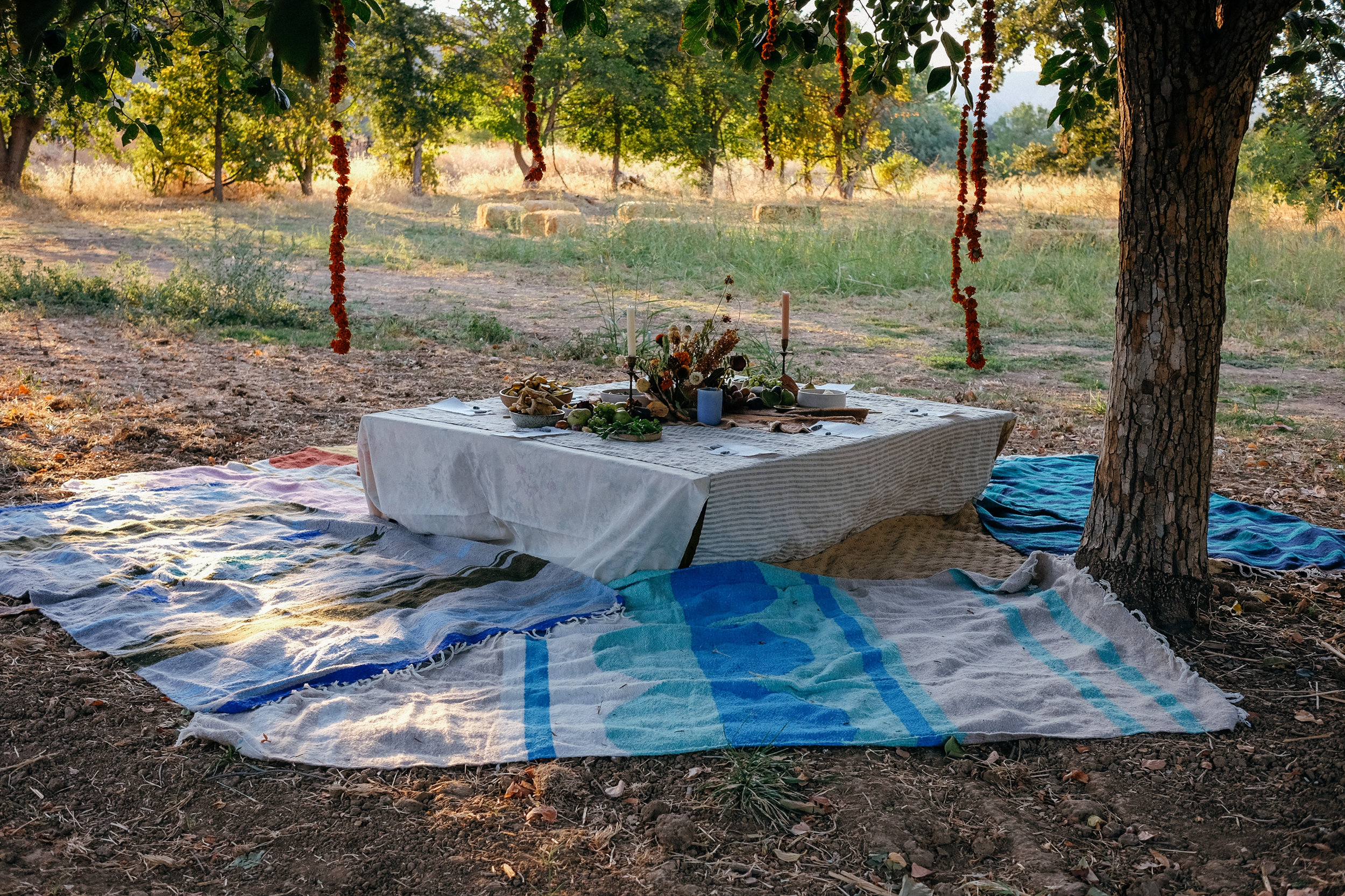 COLLAB DINNER FEAT. FARMER HANDS, NIPOMO & TOTEM CO. 08/27/17 @ FULL BELLY FARM, GUINDA • CALIFORNIA