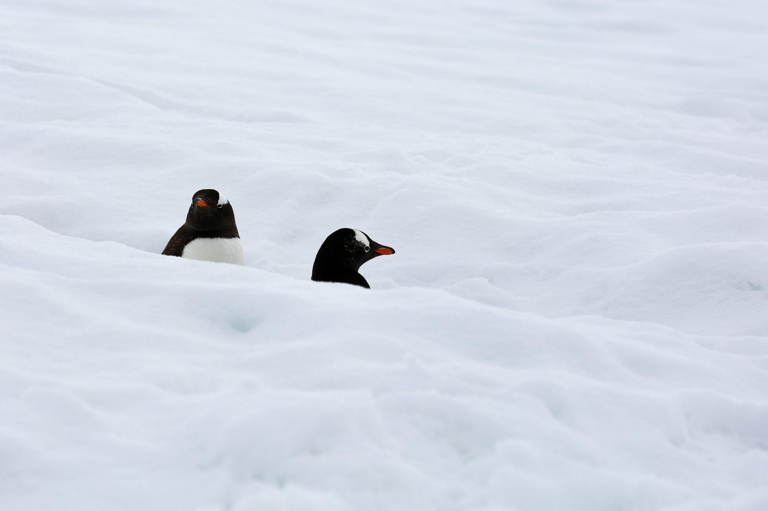 Antarctica_2017-27.jpg