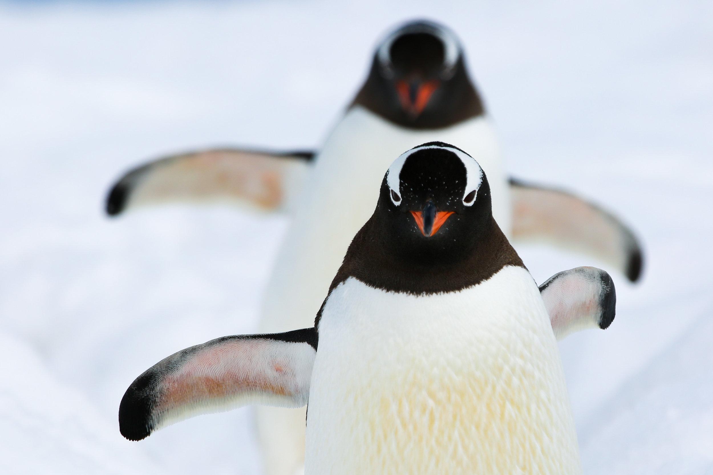 Antarctica_2017-36.jpg