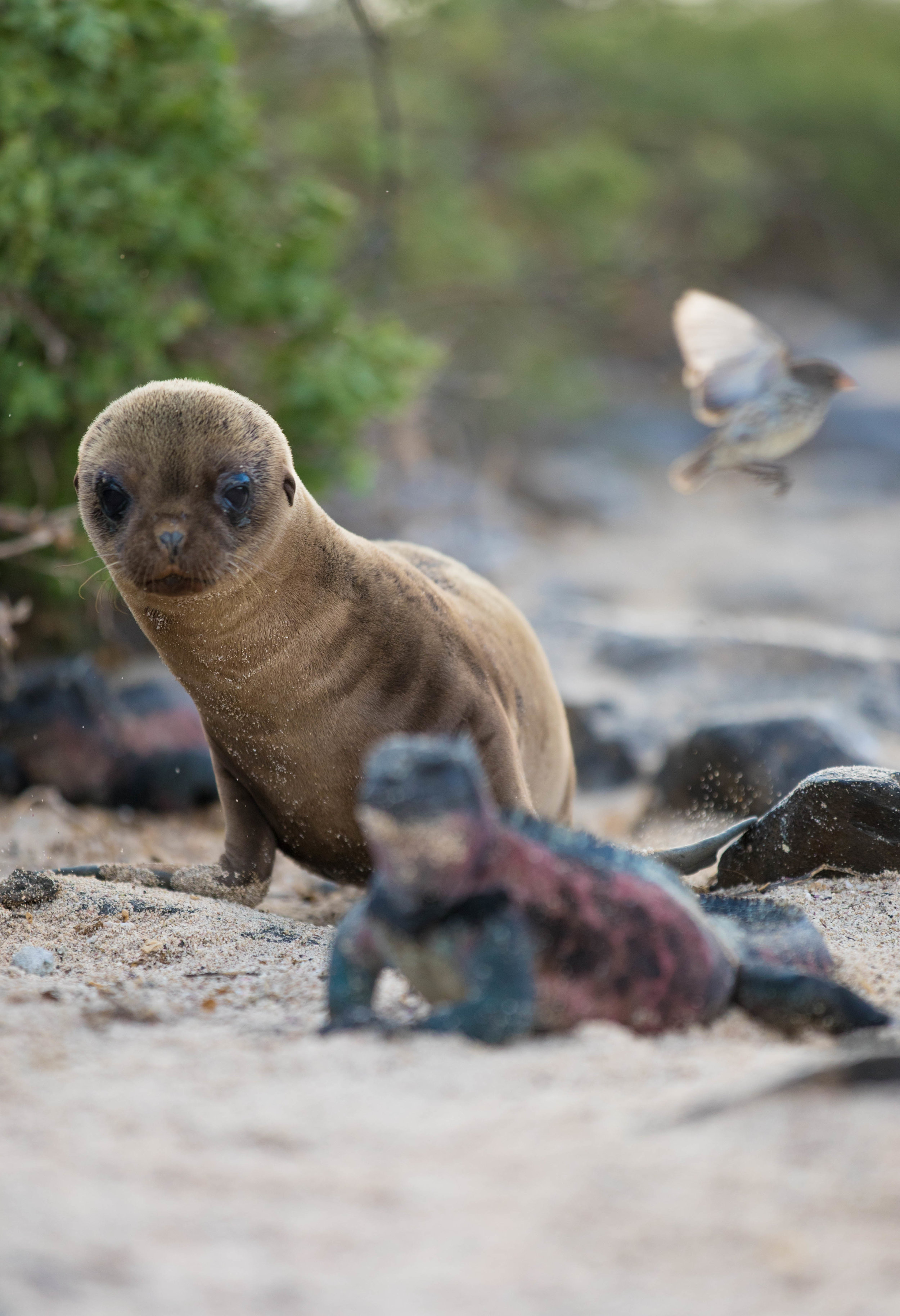 Galapagos_2018-17.jpg