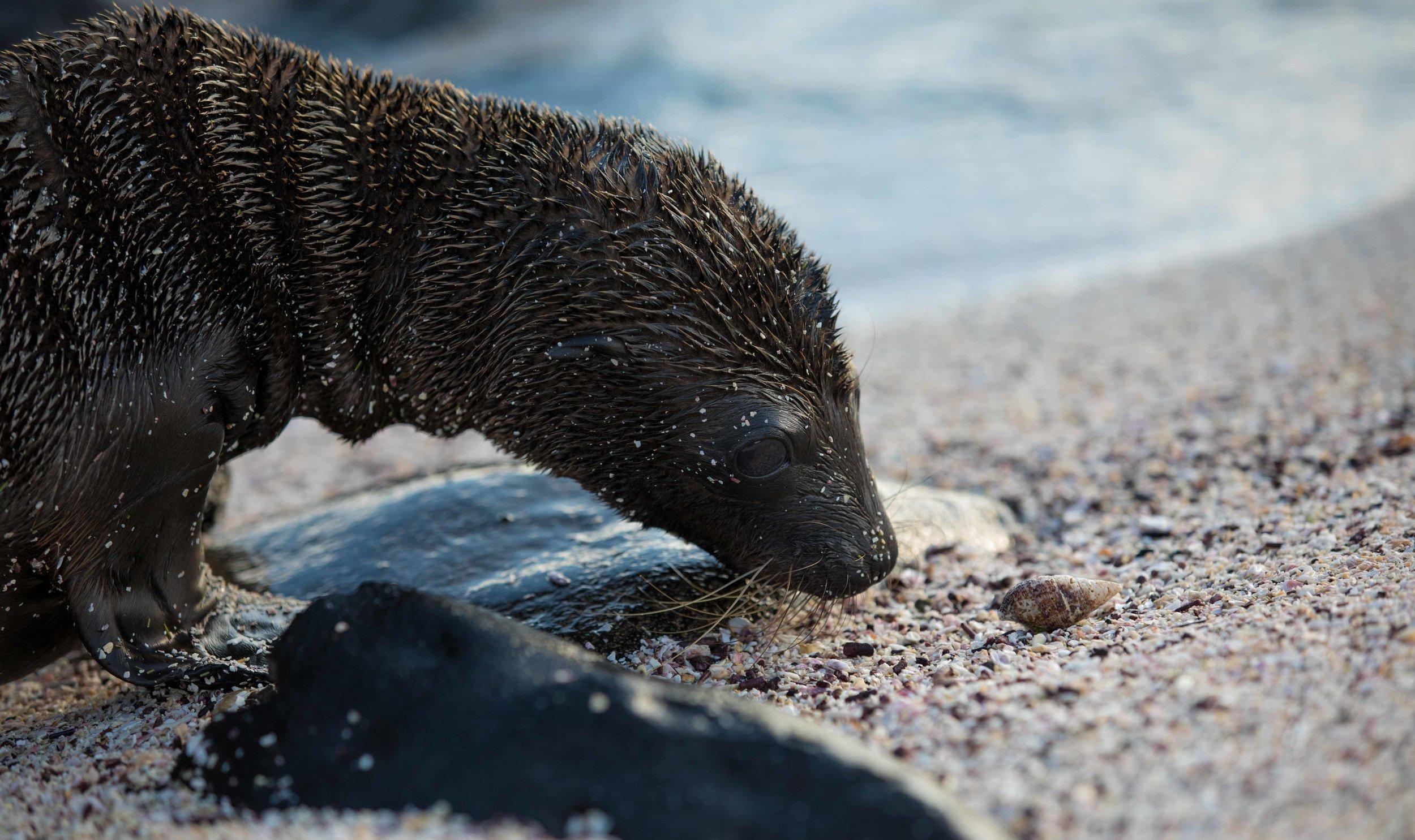 Galapagos_2018-13.jpg