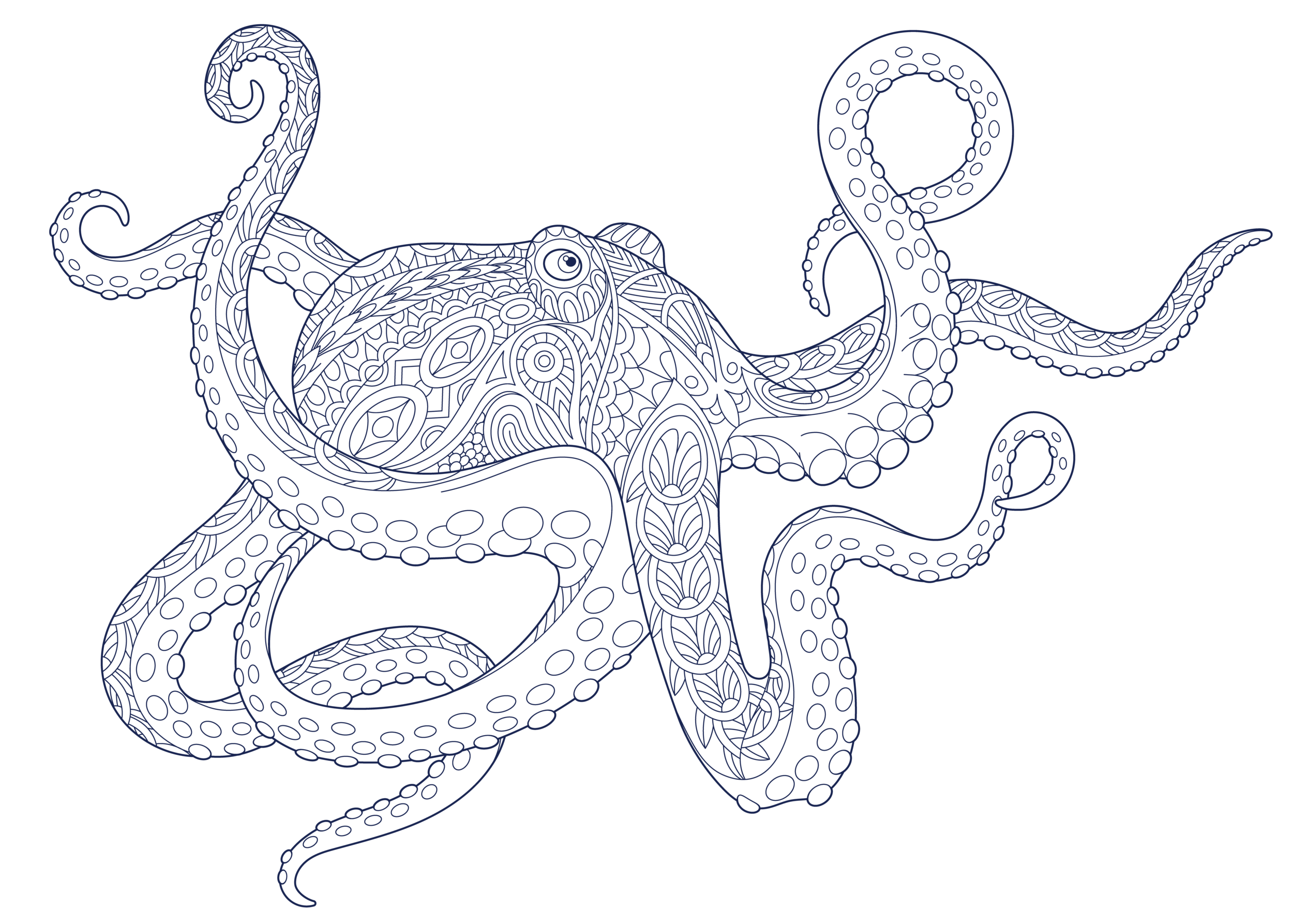 octopus_1.png