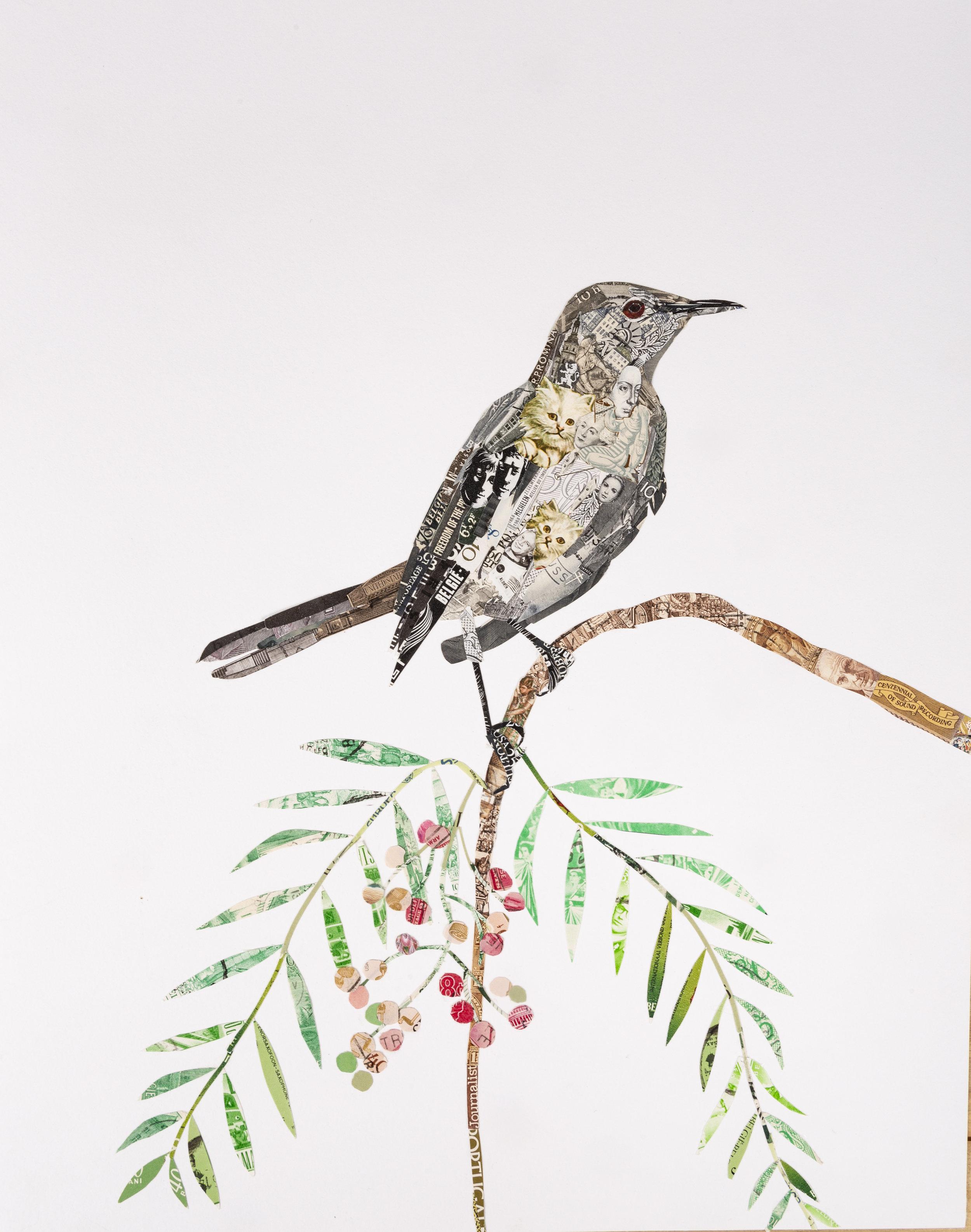 Northern Mockingbird, 2018