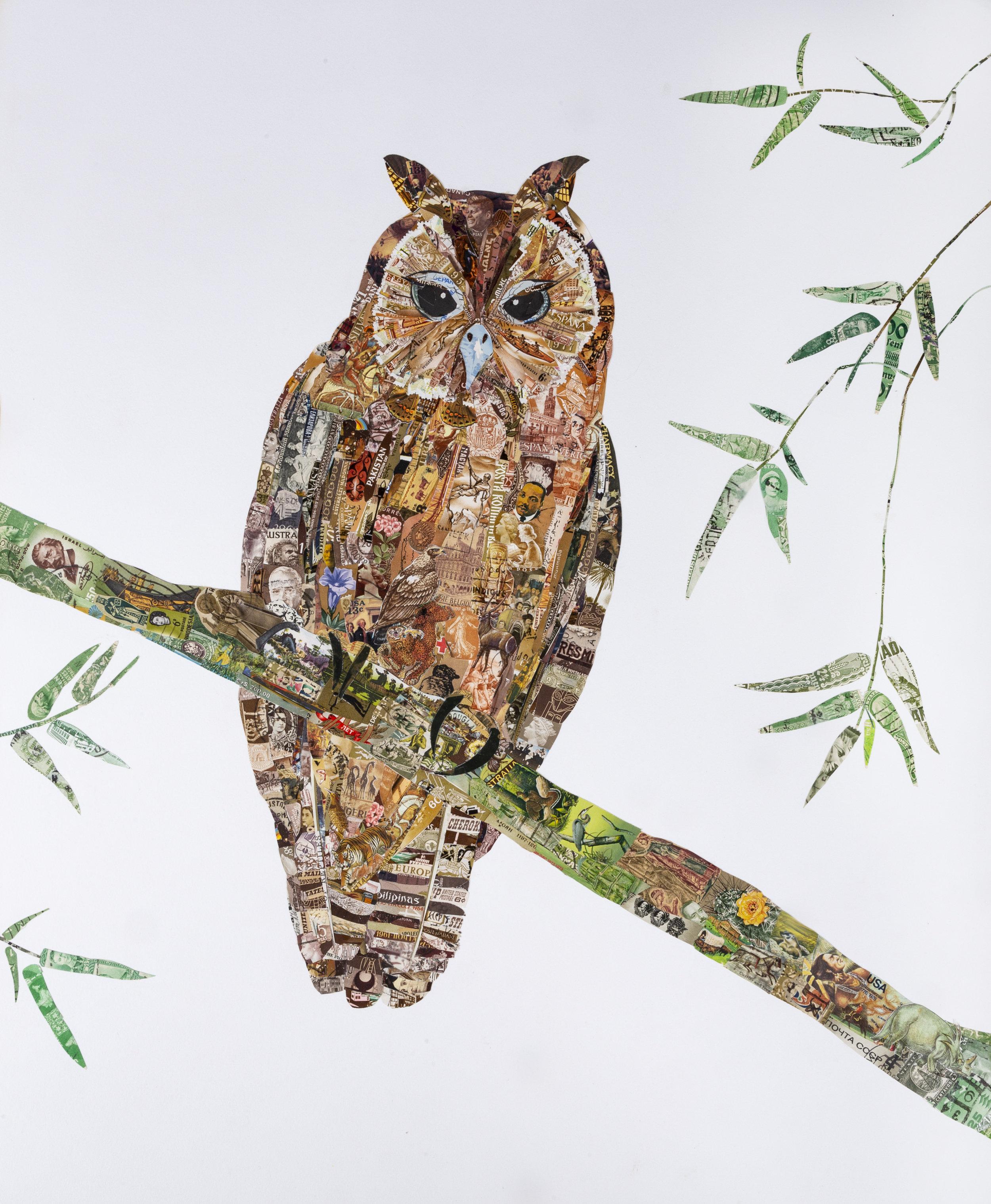 Jamaican Owl, 2017