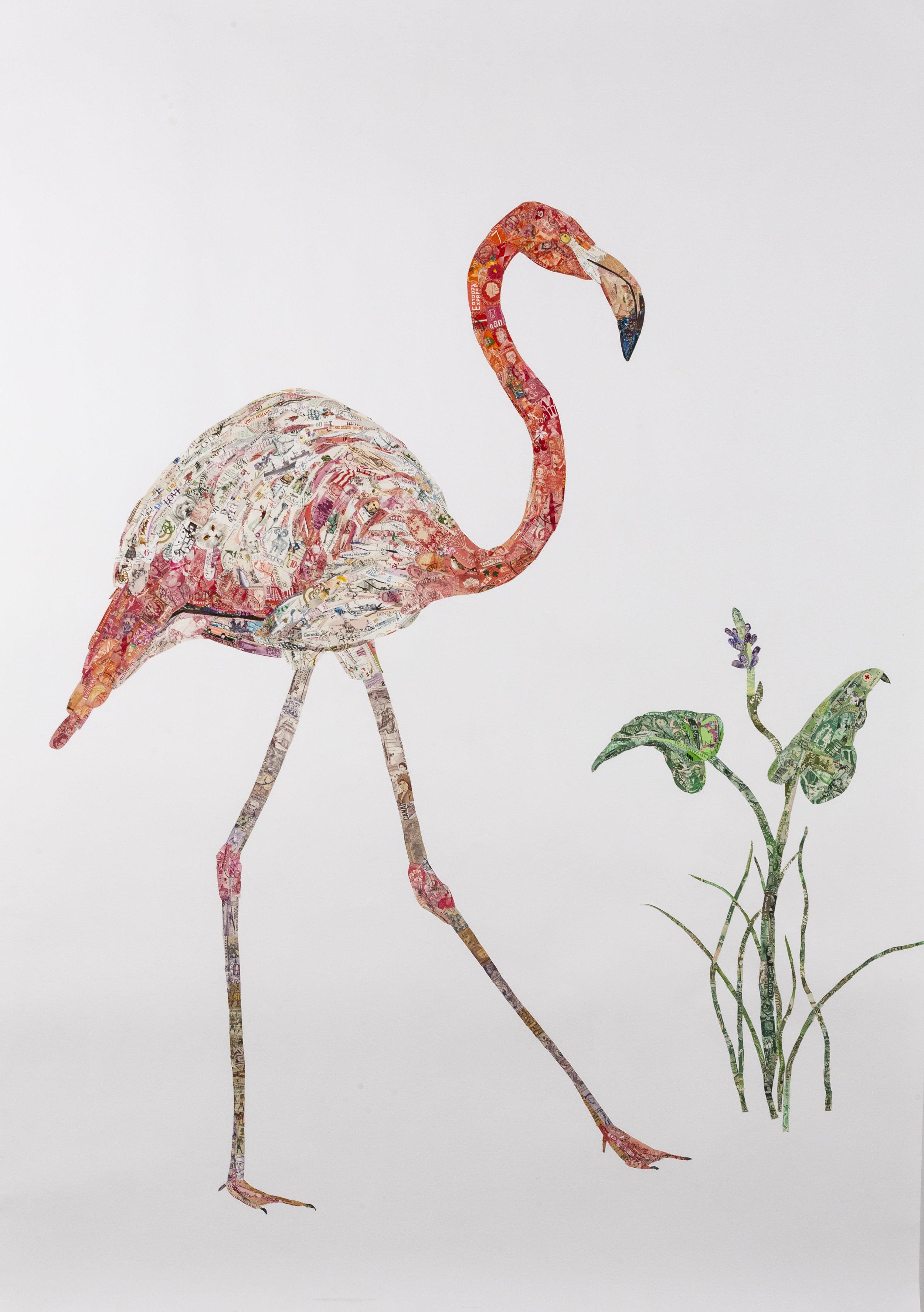 American Flamingo, 2018