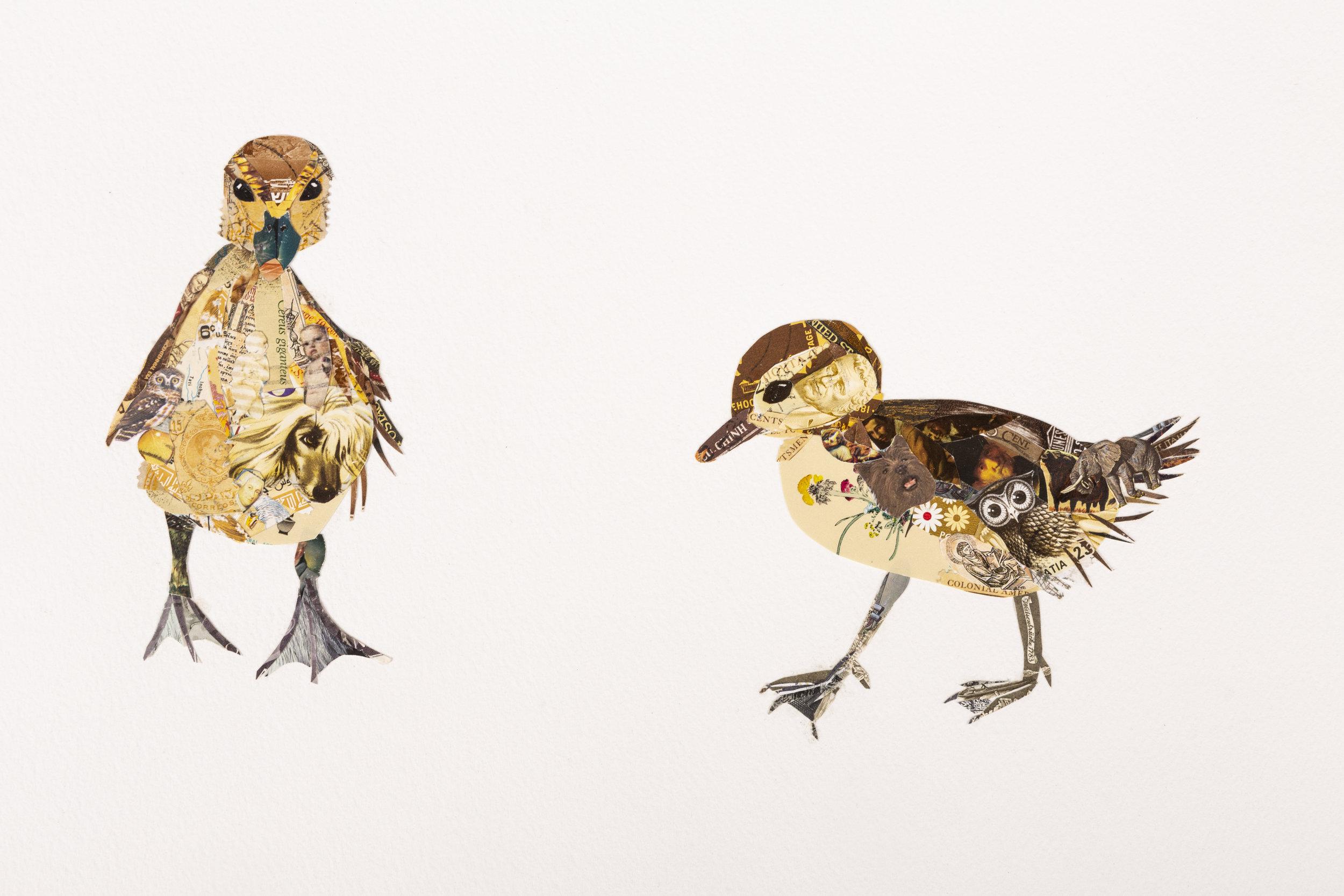 Baby Ducks #1