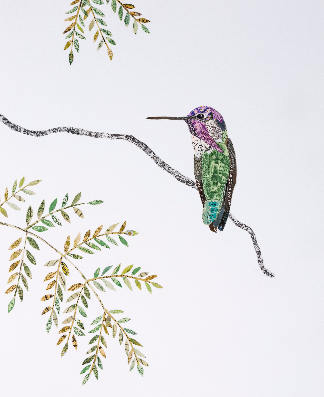 Costa's Hummingbird, 2018