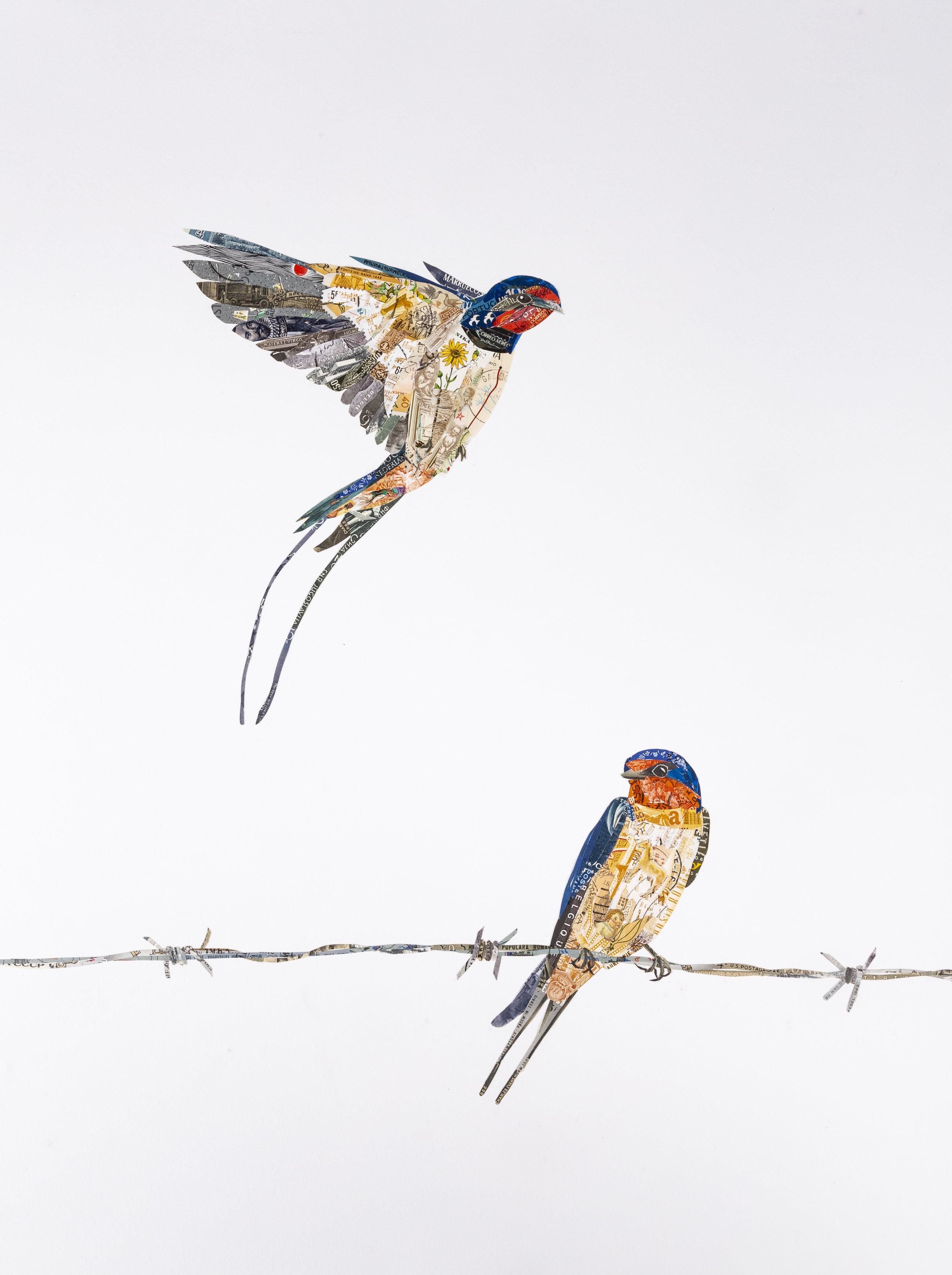 Barn Swallows, 2018