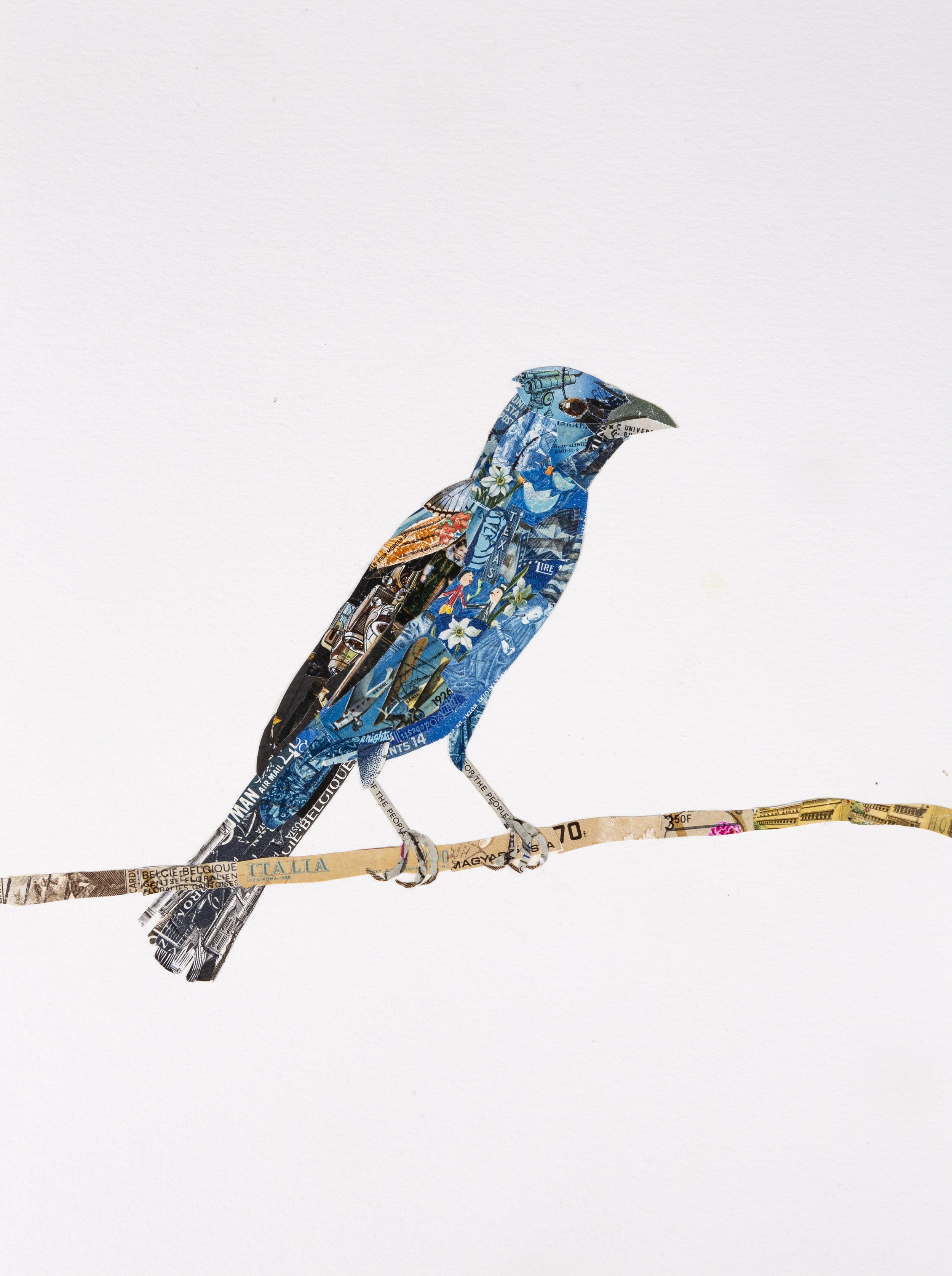 Blue Grosbeak, 2018