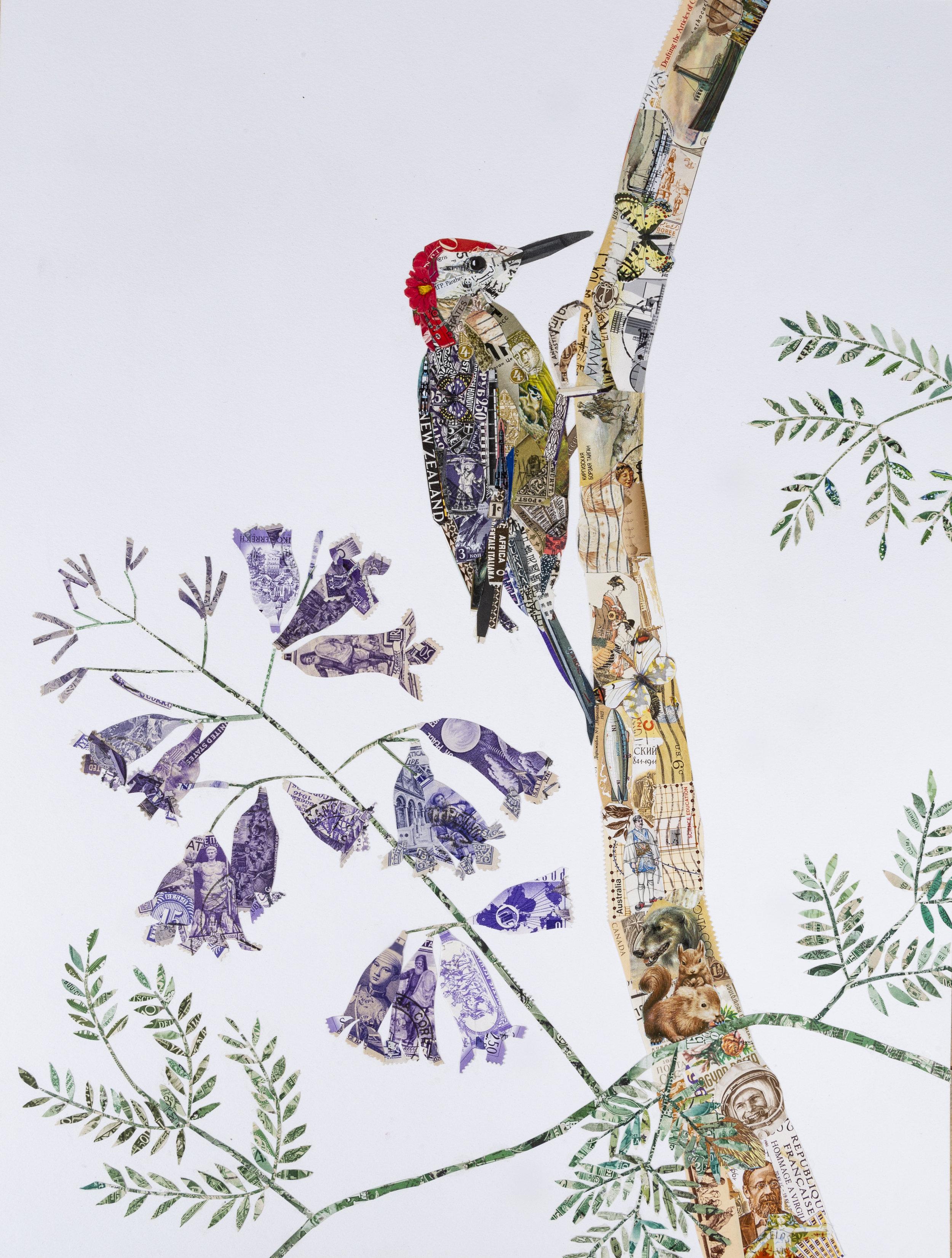 Jamaican Woodpecker, 2017