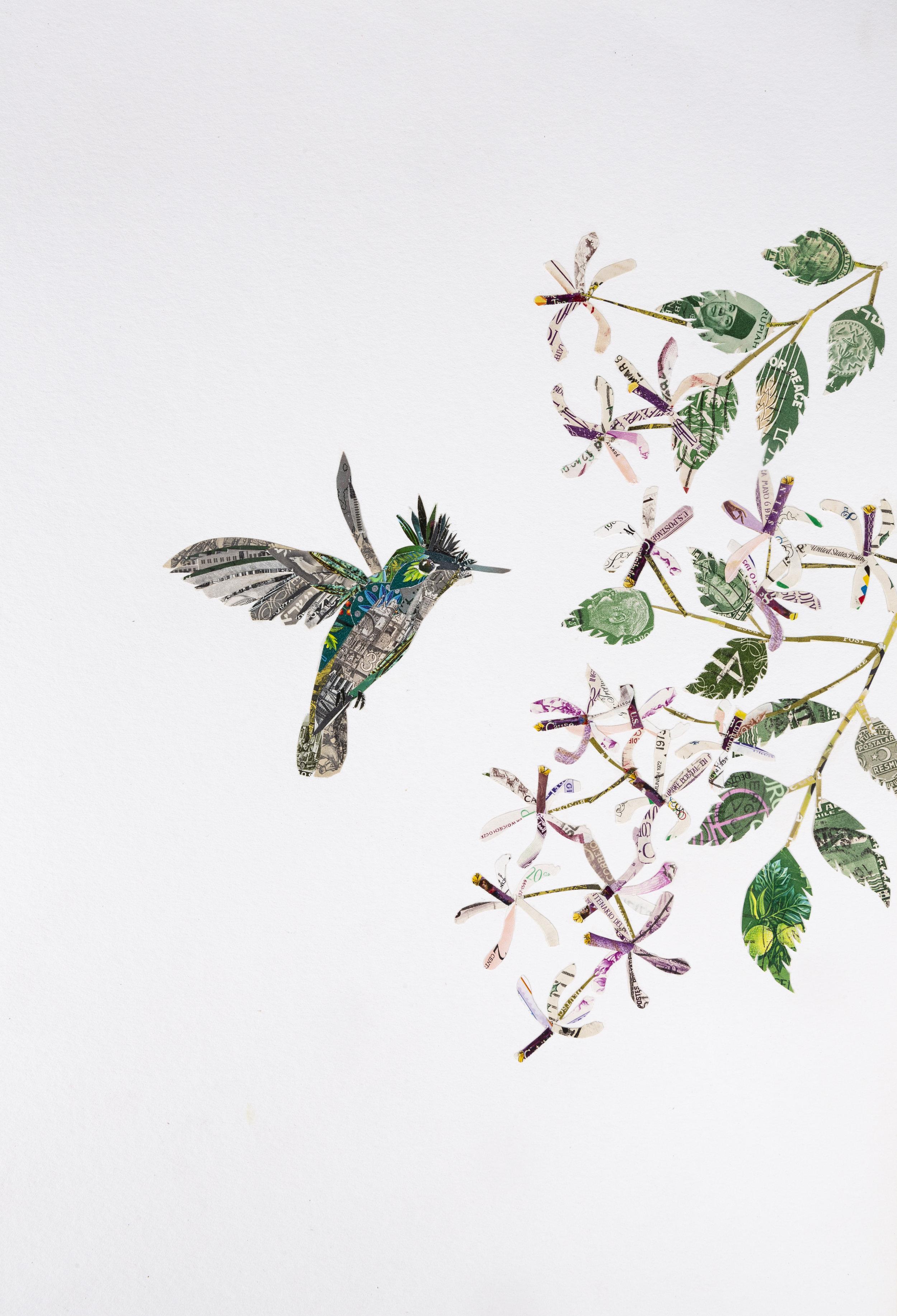 Antillean Crested Hummingbird, 2017