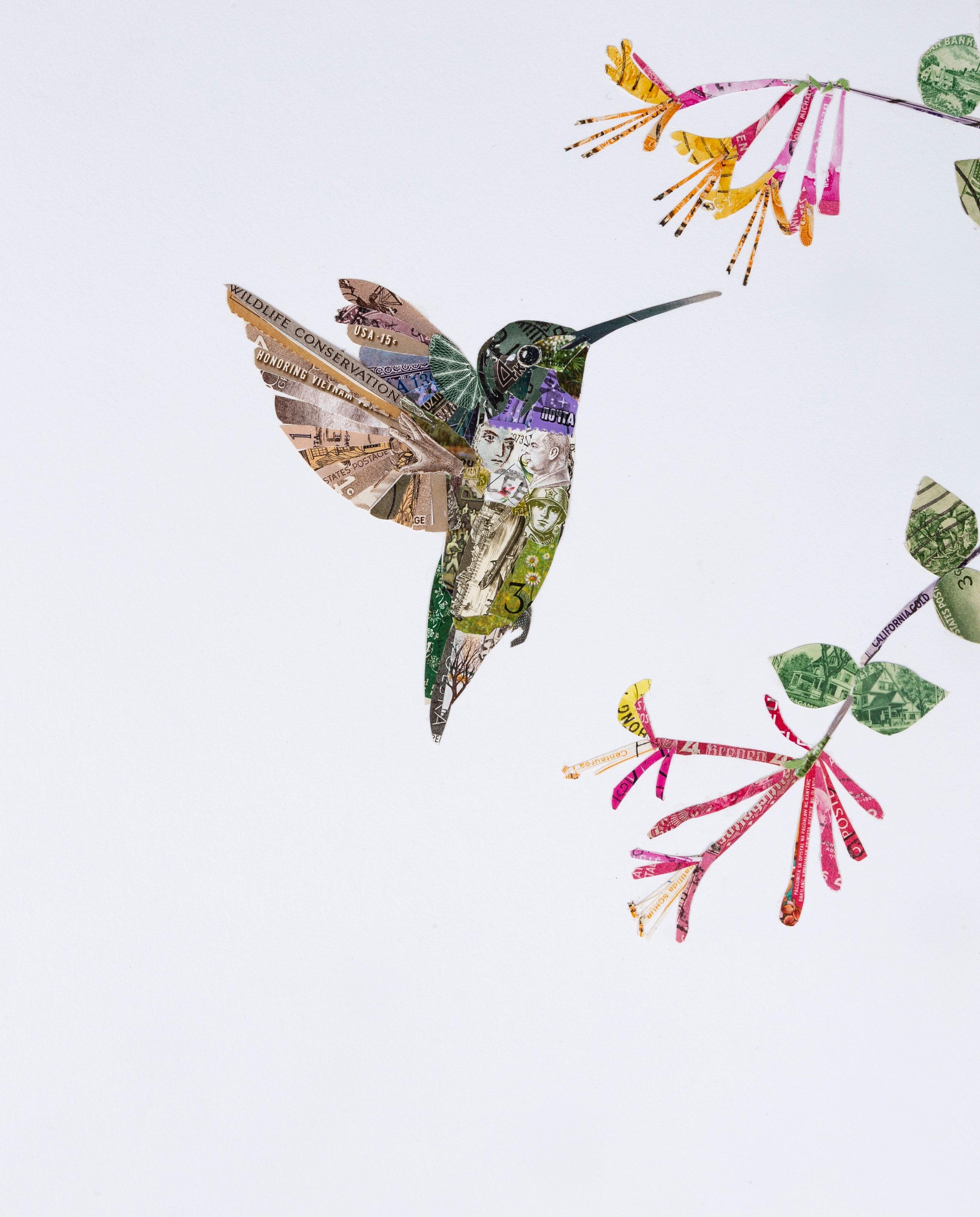 Black-chinned Hummingbird, 2018