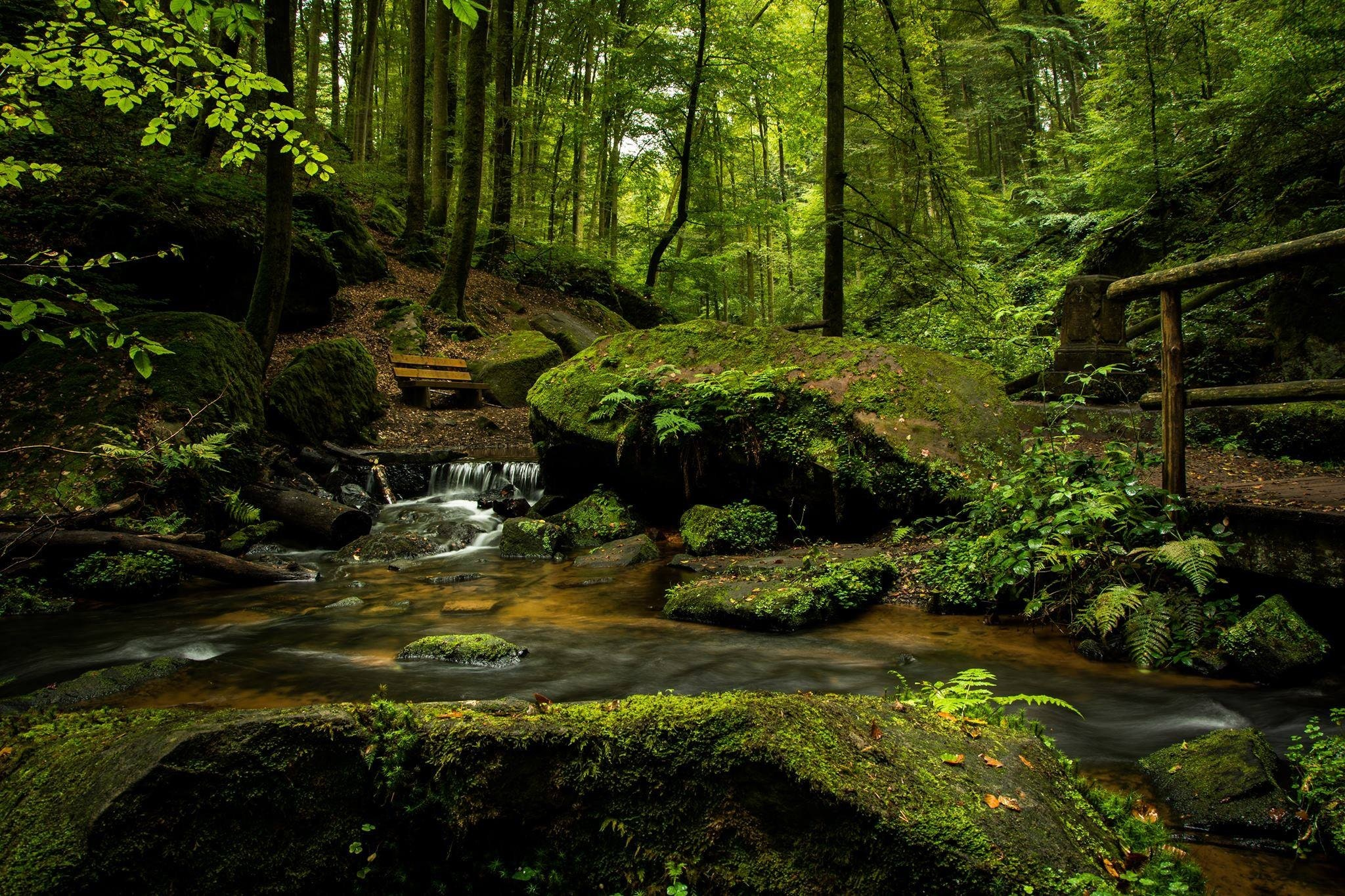 Let the essence of the forest wash over you …