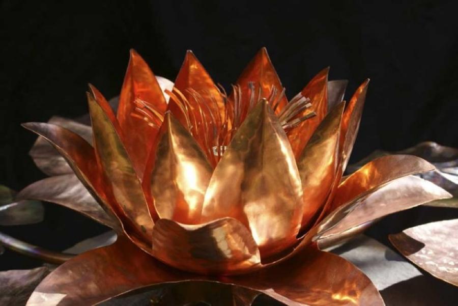 Copper lotus lily