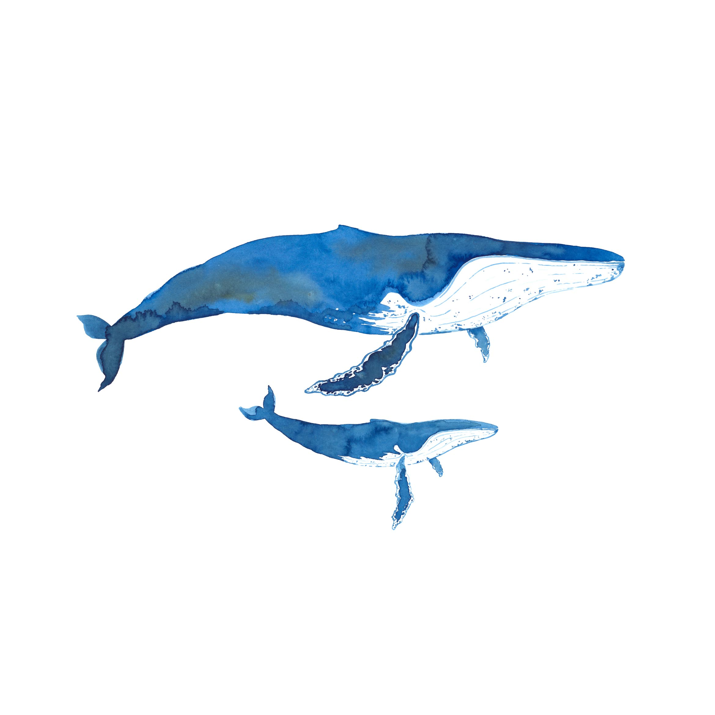 Whale Love -  2017 Watercolour on paper  Limited Print