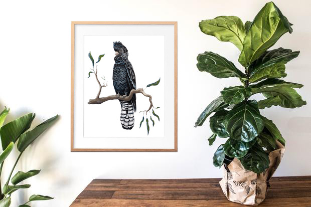 fiddle leaf black cockatoo painting watercolour print.jpg