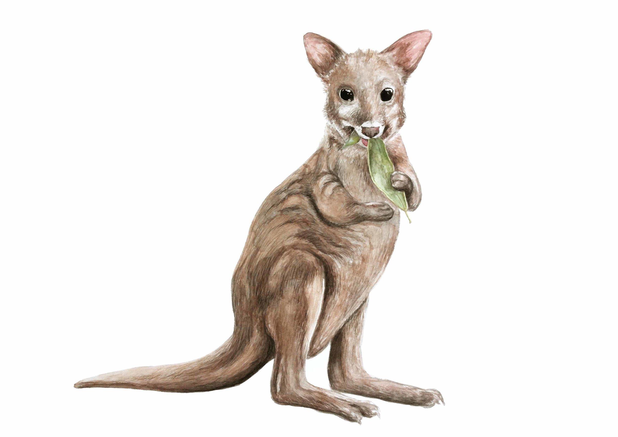 psdemelon wallaby australian animal cute nursery art baby watercolour print