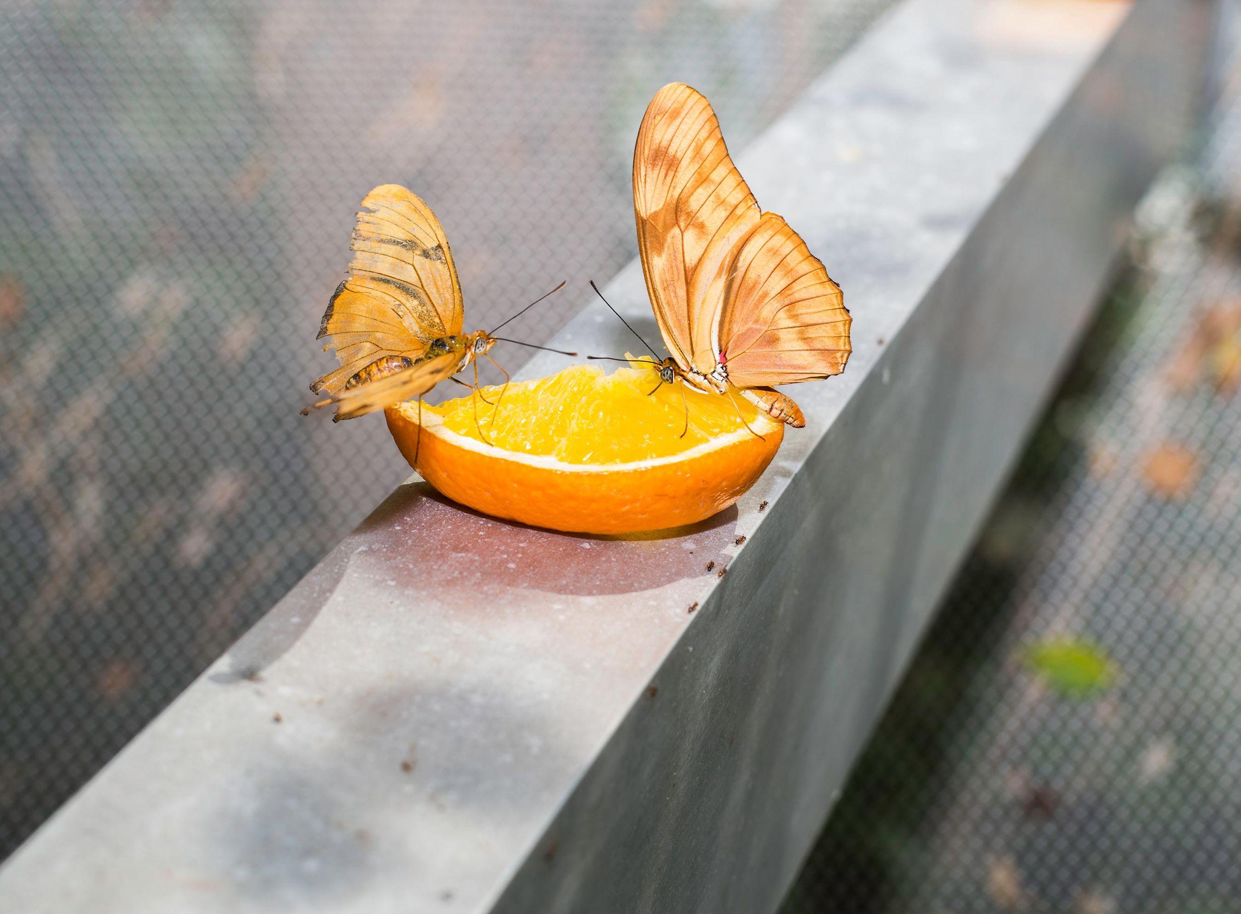 Farah Al Qasimi, Butterfly Garden , 2016