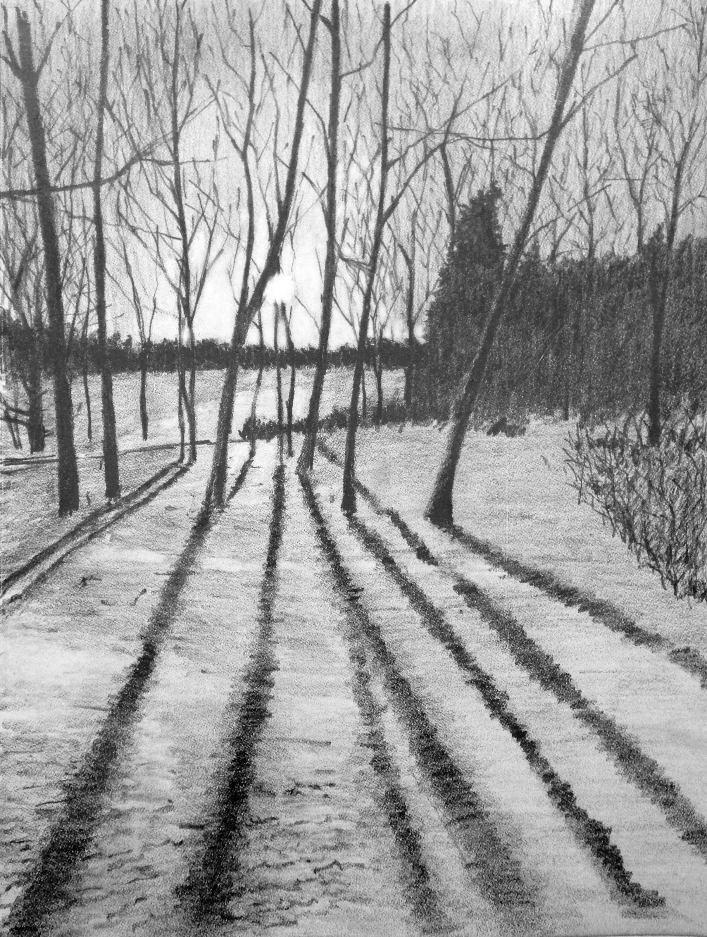 Benzie_Crystal Downs_Sunset_Tree_Shadows.12.13(2).jpg