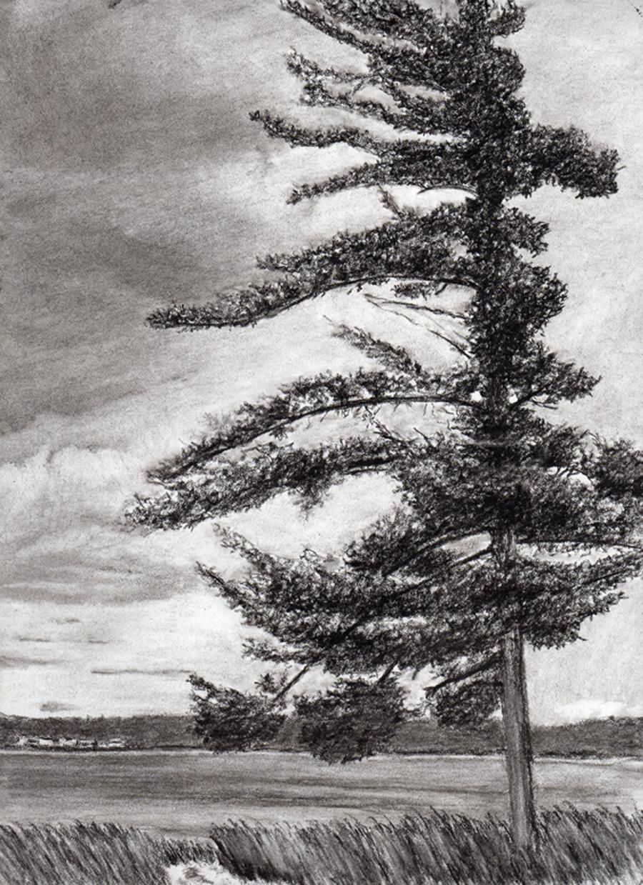 Oneida Pine