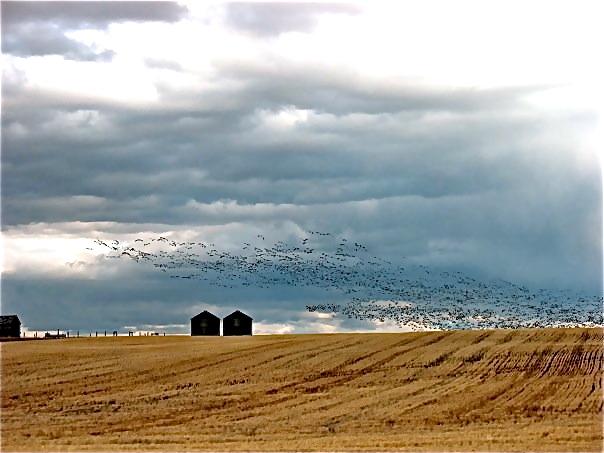 wheat silos w-birds.jpg