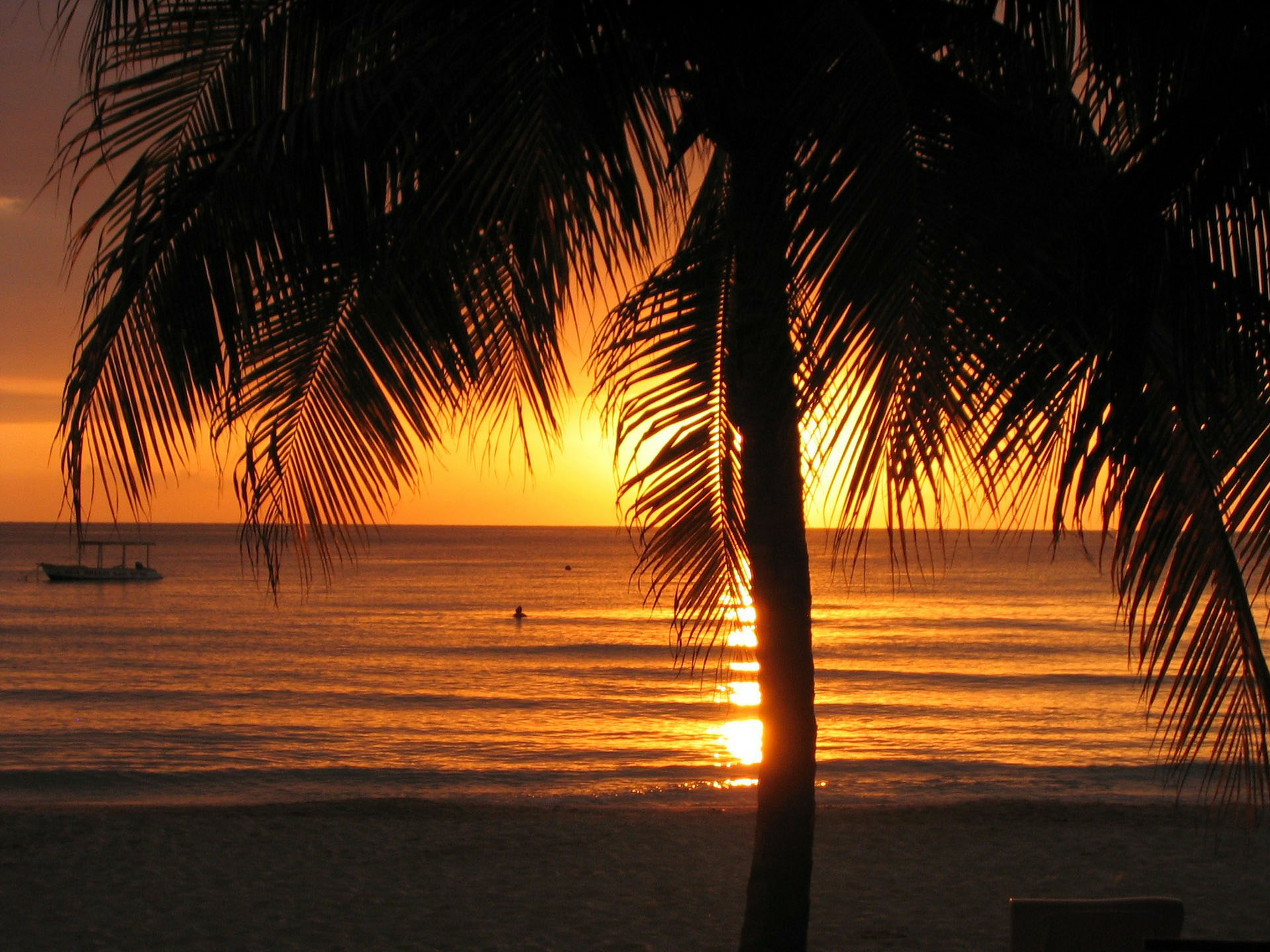 Sunset on a beach. A palm tree in the foreground with a small boat & a person swimming in the water in the background.