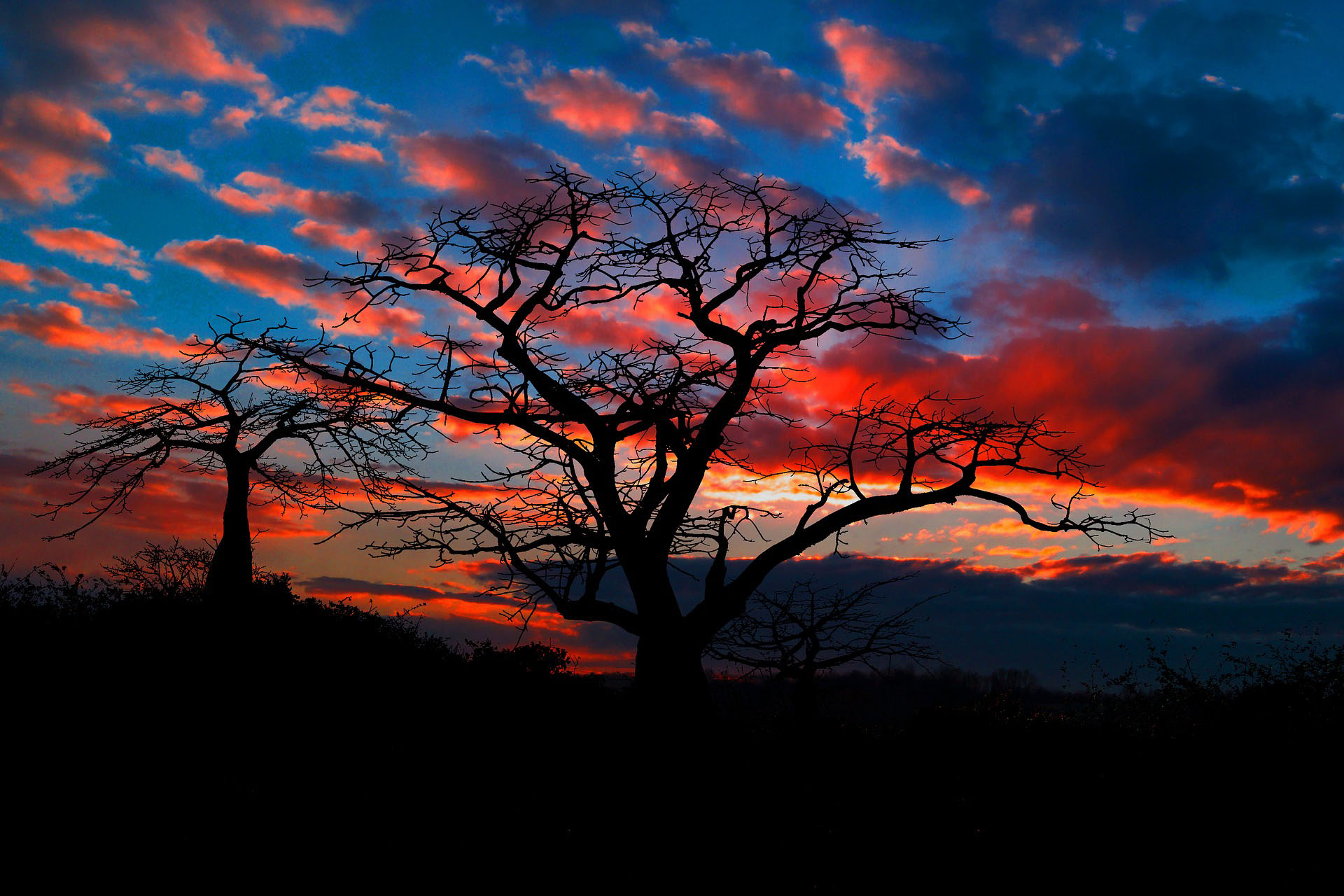 A vista in Angola of 2 trees in black are silhouetted against a brilliant sky of bright blue with orange-tinted clouds