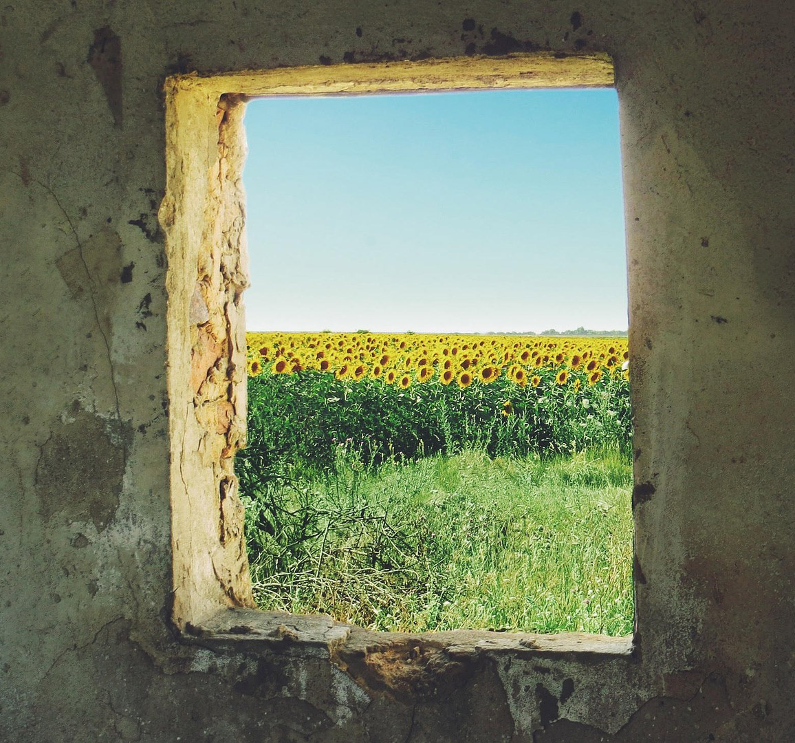 Peering through a empty square of a window in a gritty cement wall in the Ukraine to view a field full of sunflowers.