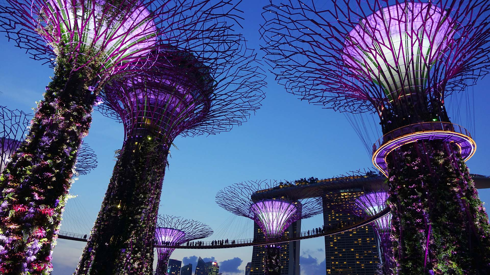 "A dramatic shot of the Garden by the Bay in Singapore which includes huge futuristic structures which people can walk around high in the air. These are made to resemble trees with bare metal branches at the tops & greenery going up the ""trunk."""