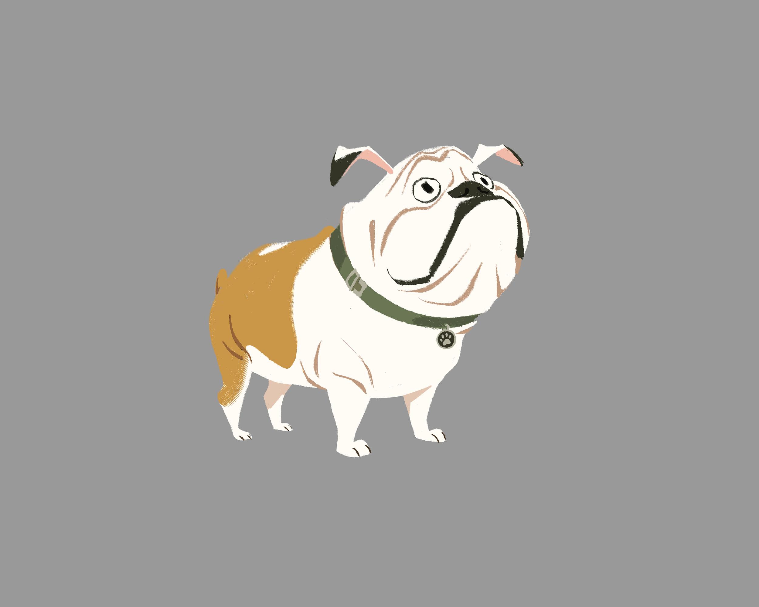 English Bulldog Clean.png