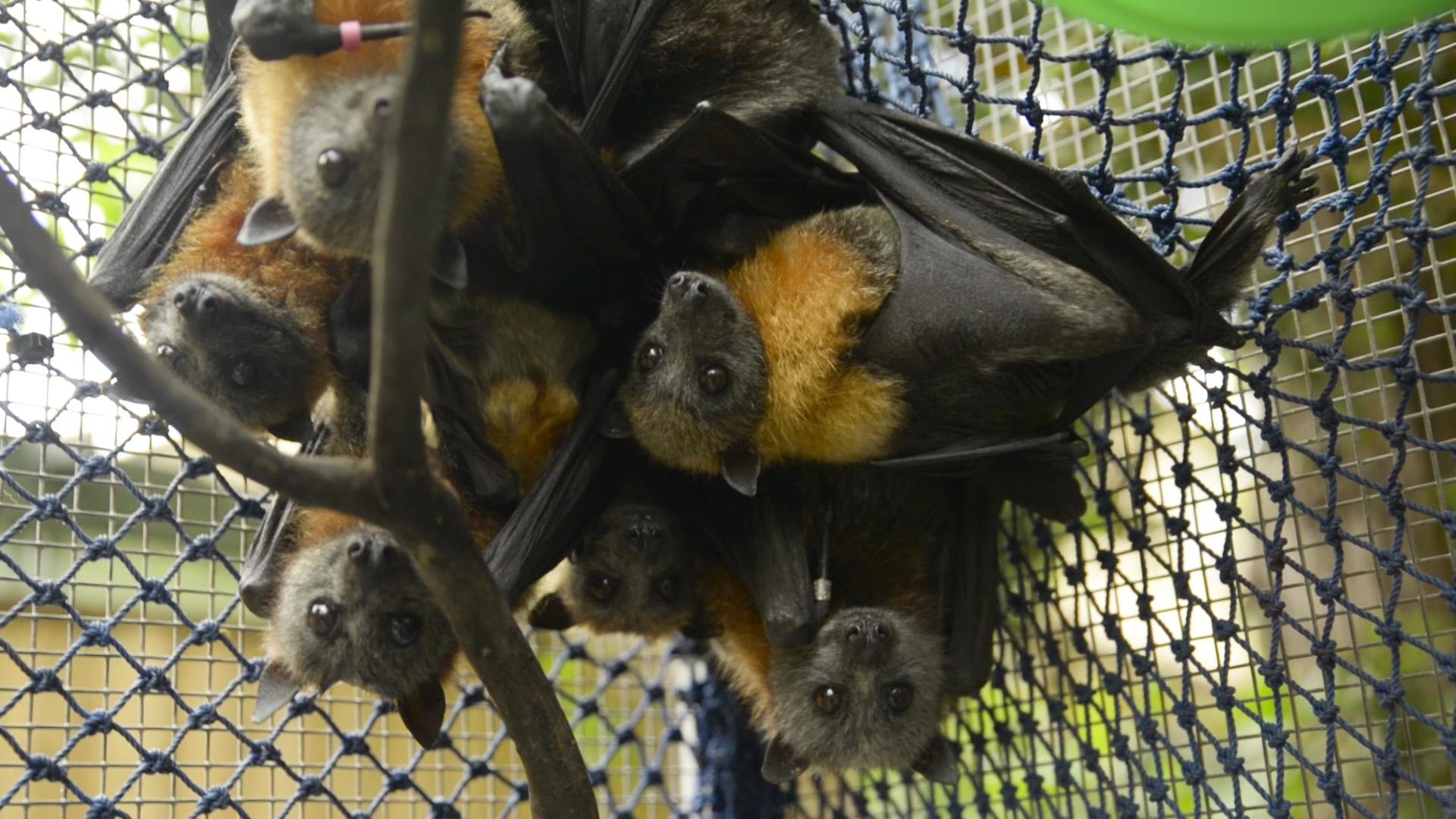 BatStill2.jpg