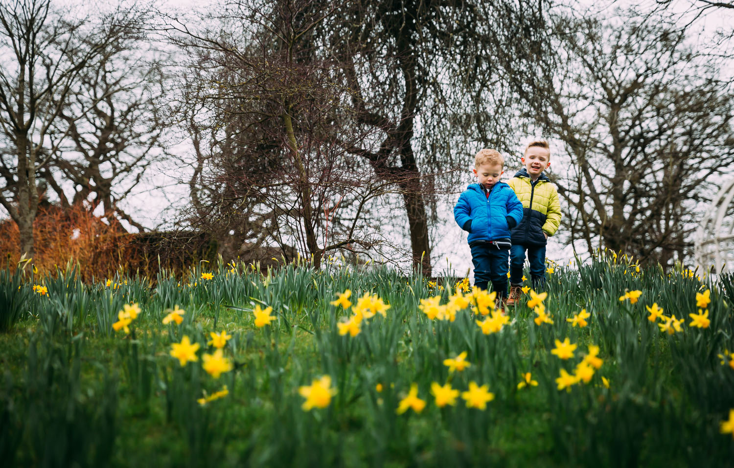 two brothers under 5s walk on bed of daffodils